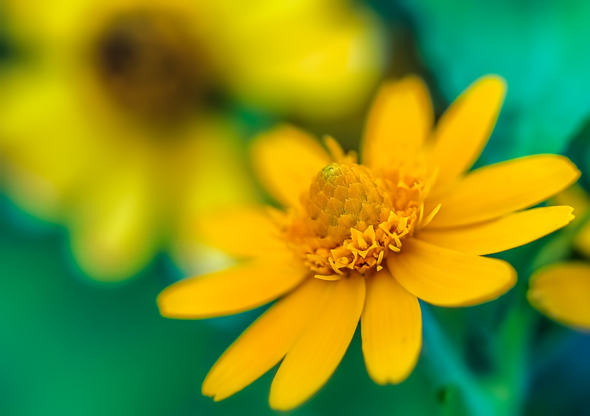 Yellow Flower by Kok Tien Sang