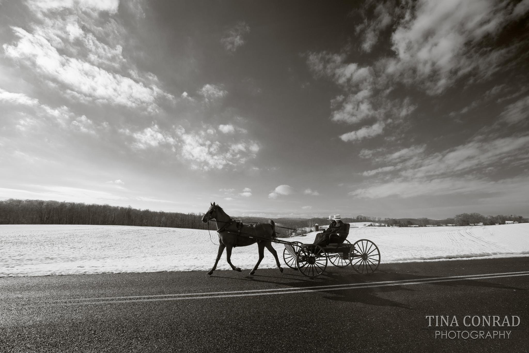 Amish County by Tina Conrad Photography