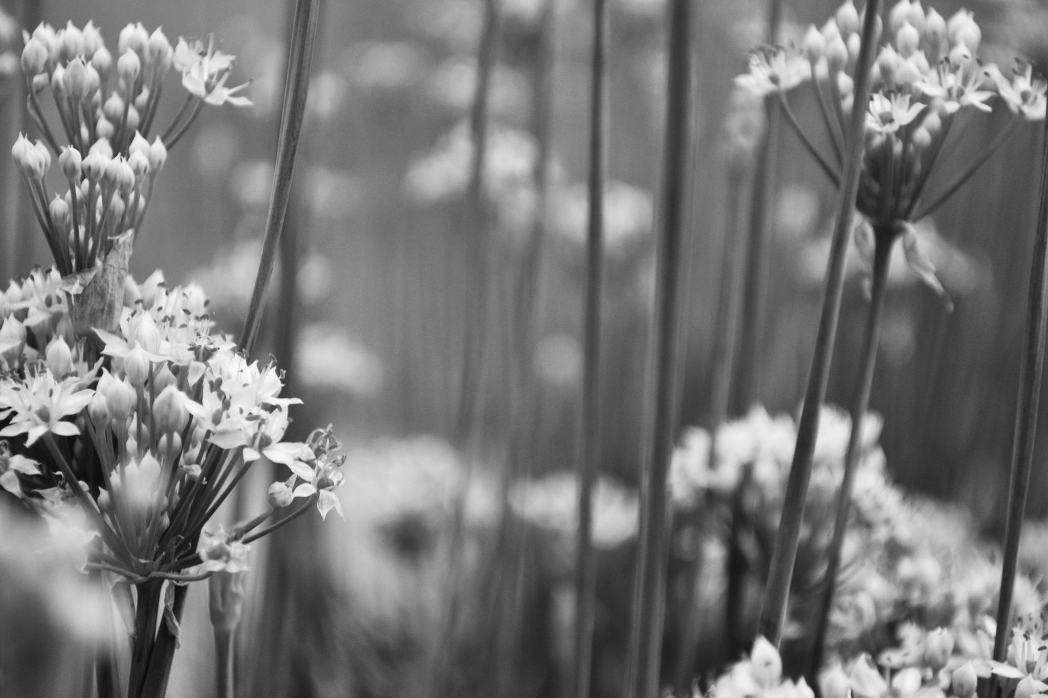 Life in Black and White by Linda Masanimptewa