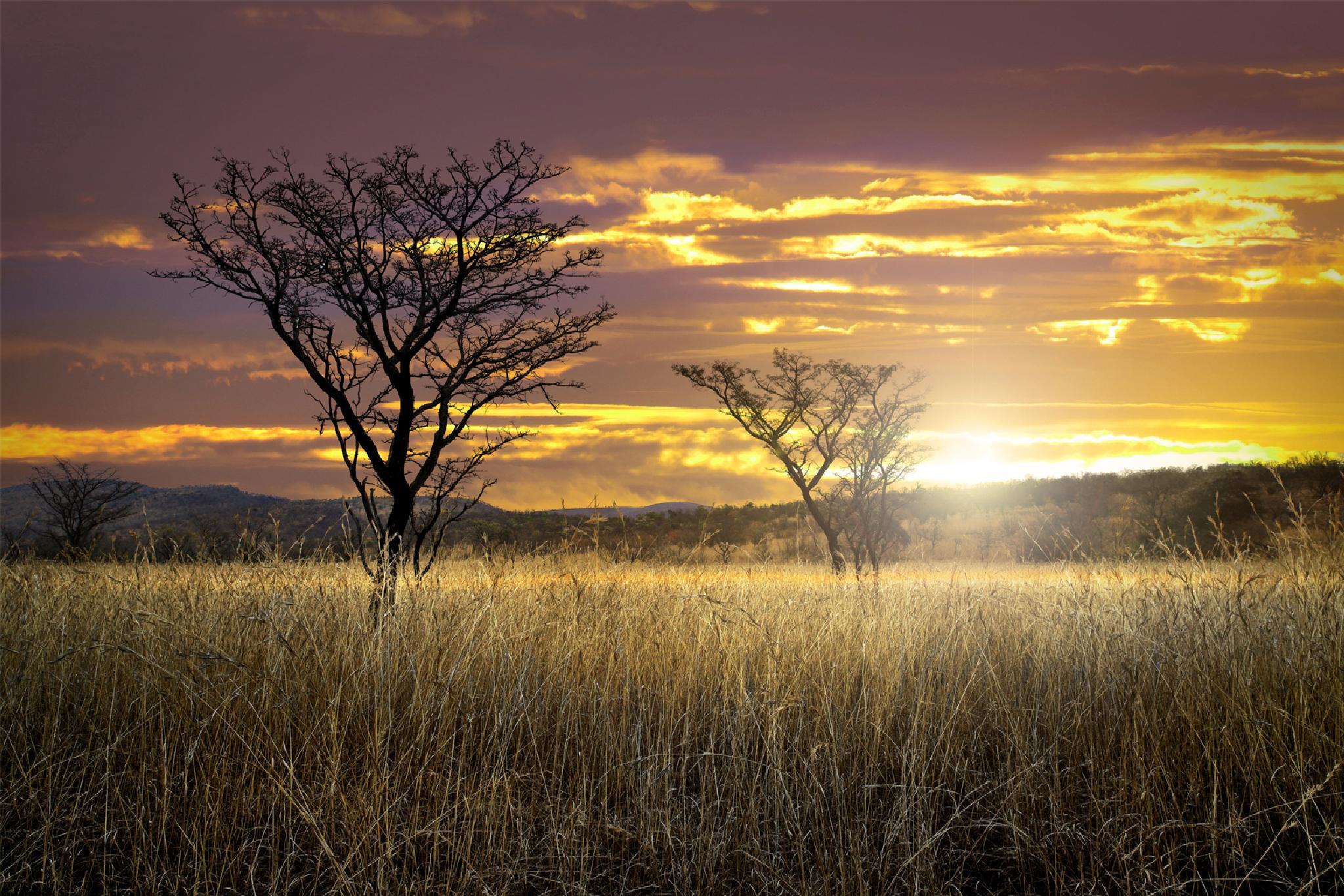 whisper of Africa by GeorgeVeltchev