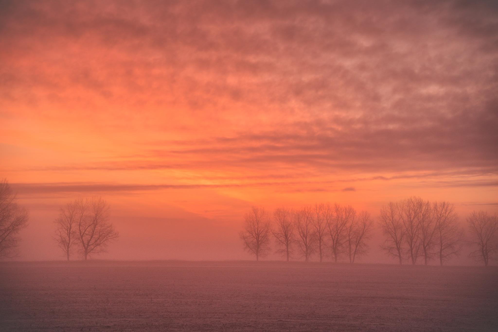 Foggy Sunrise by Brownacres