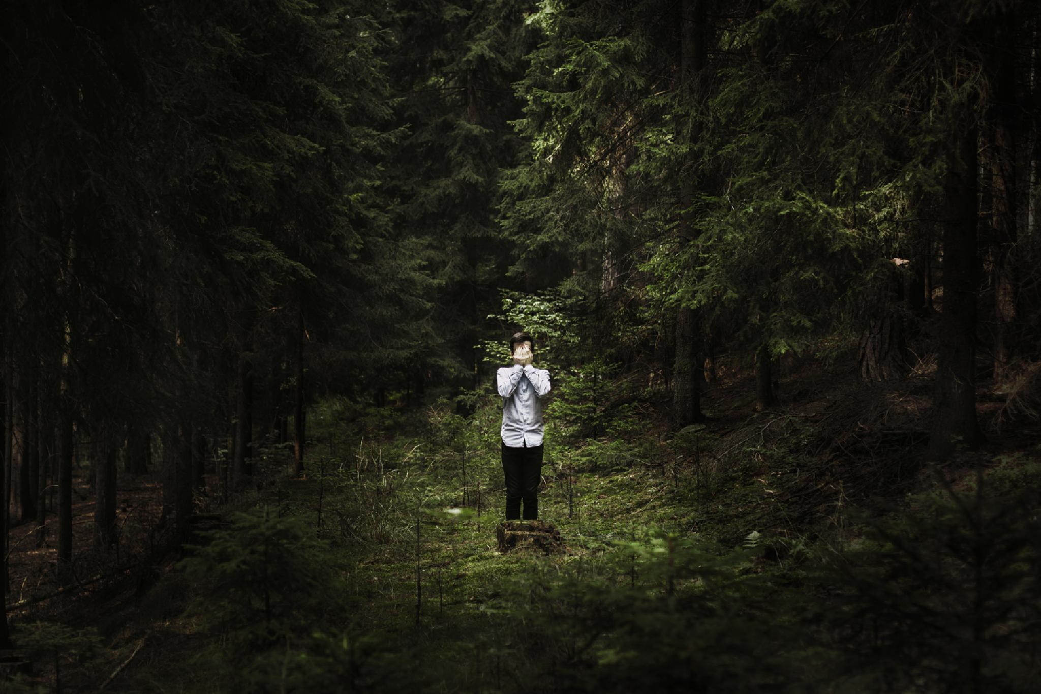 Lost in forest by Milan Vopalensky
