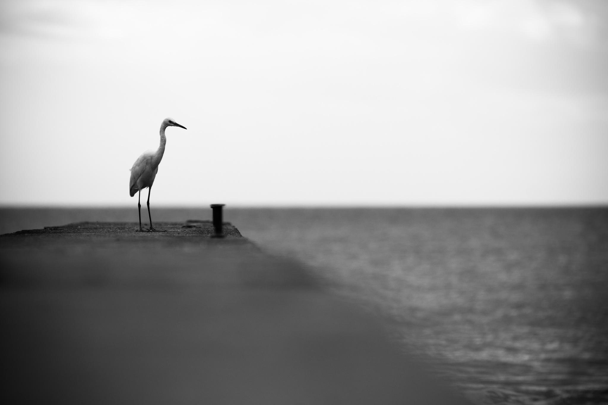 Fauna de playa by pratofrancisco