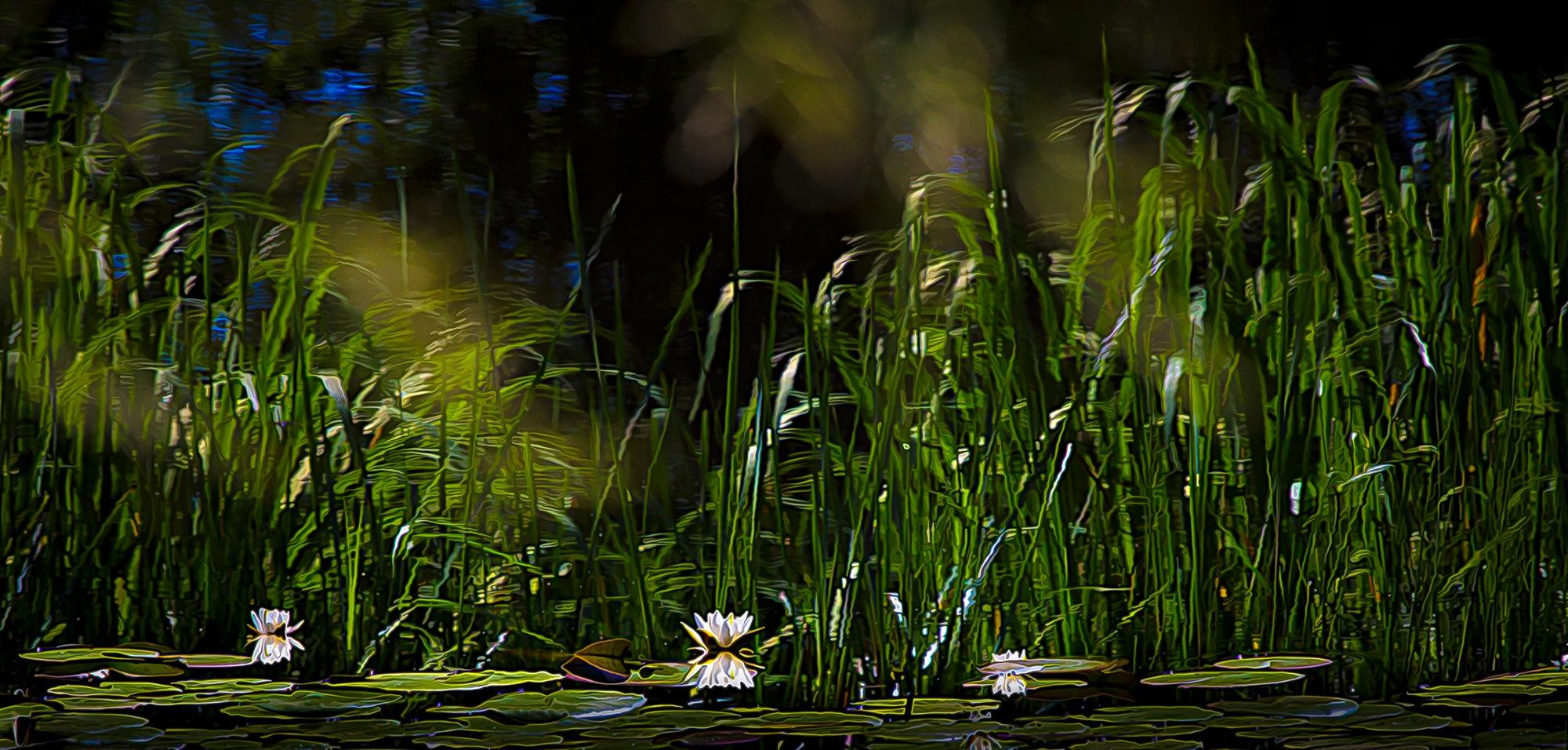 Пруд черепахи Тортиллы by SergeyBelyaev