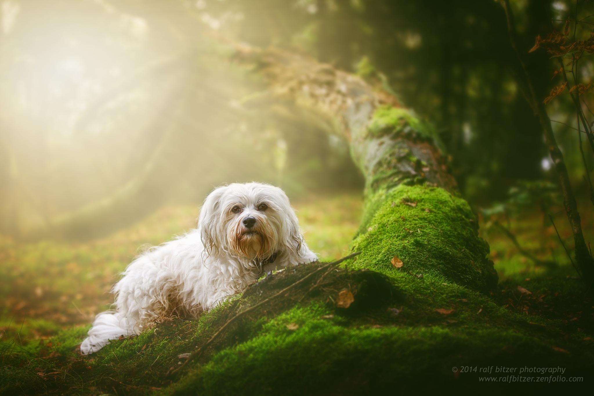 Soft light by Ralf Bitzer