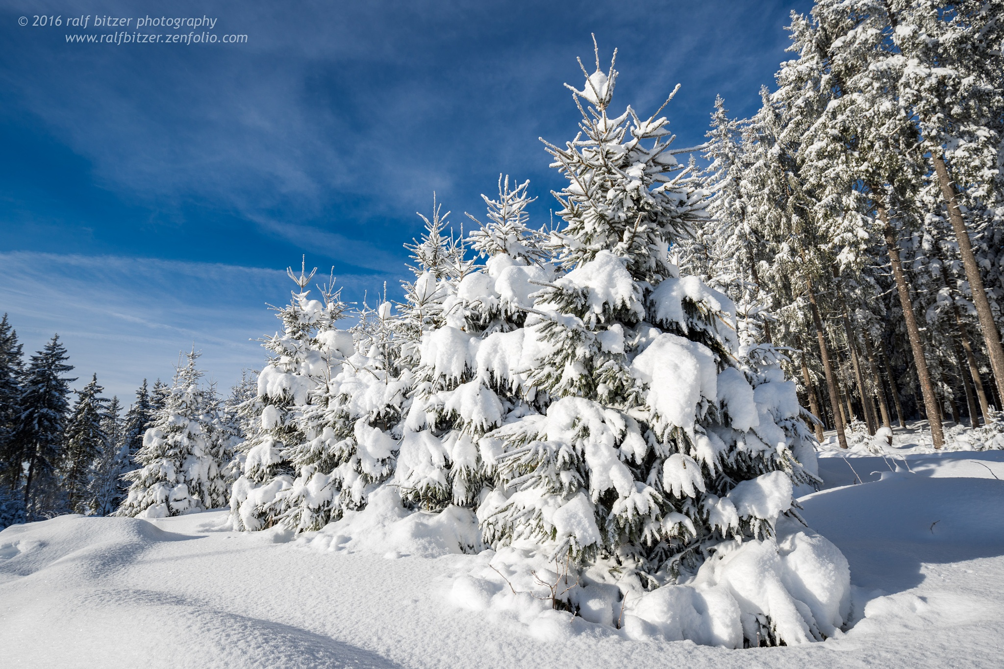 Snow by Ralf Bitzer