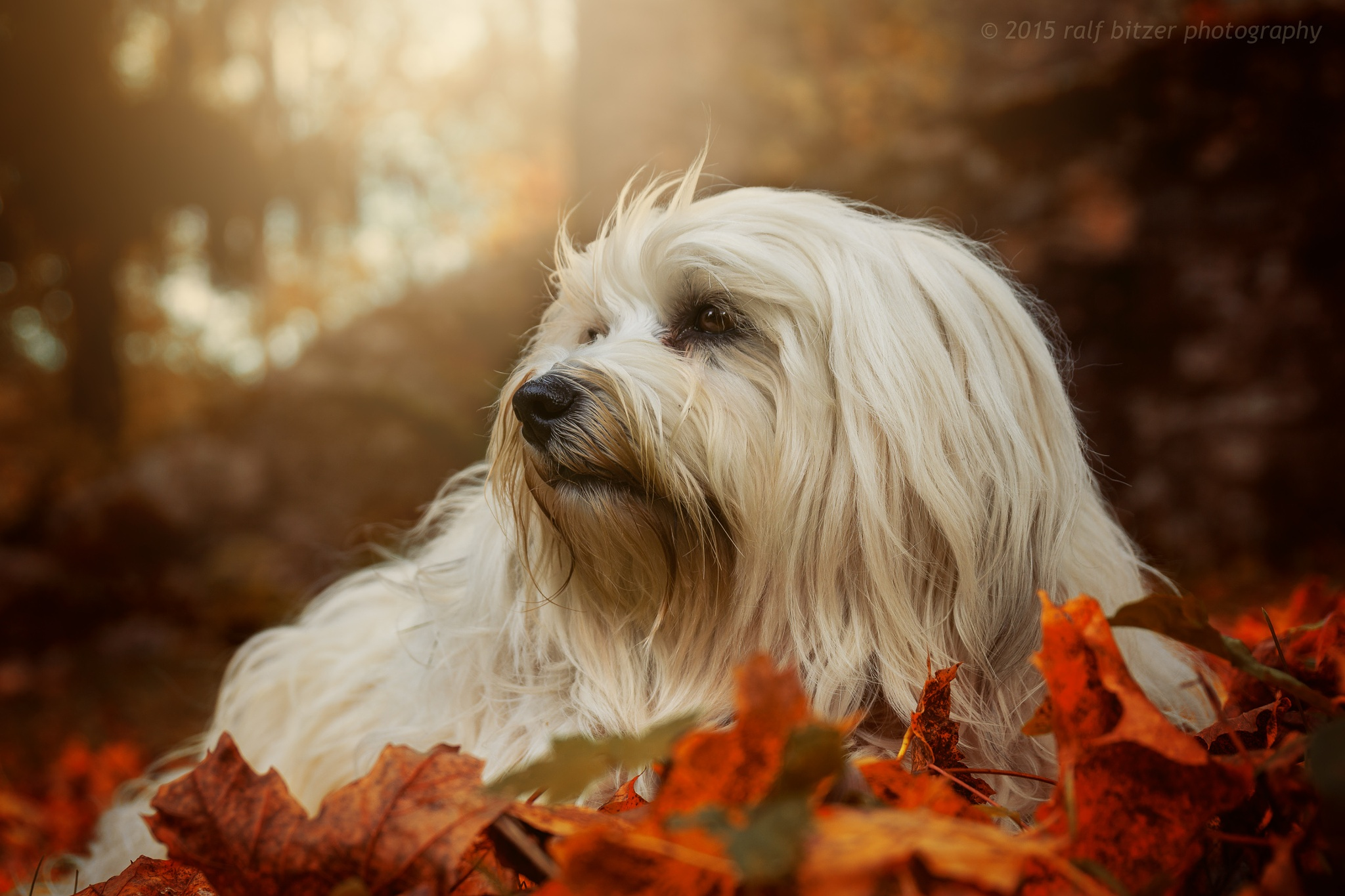 Wonderful autumn by Ralf Bitzer