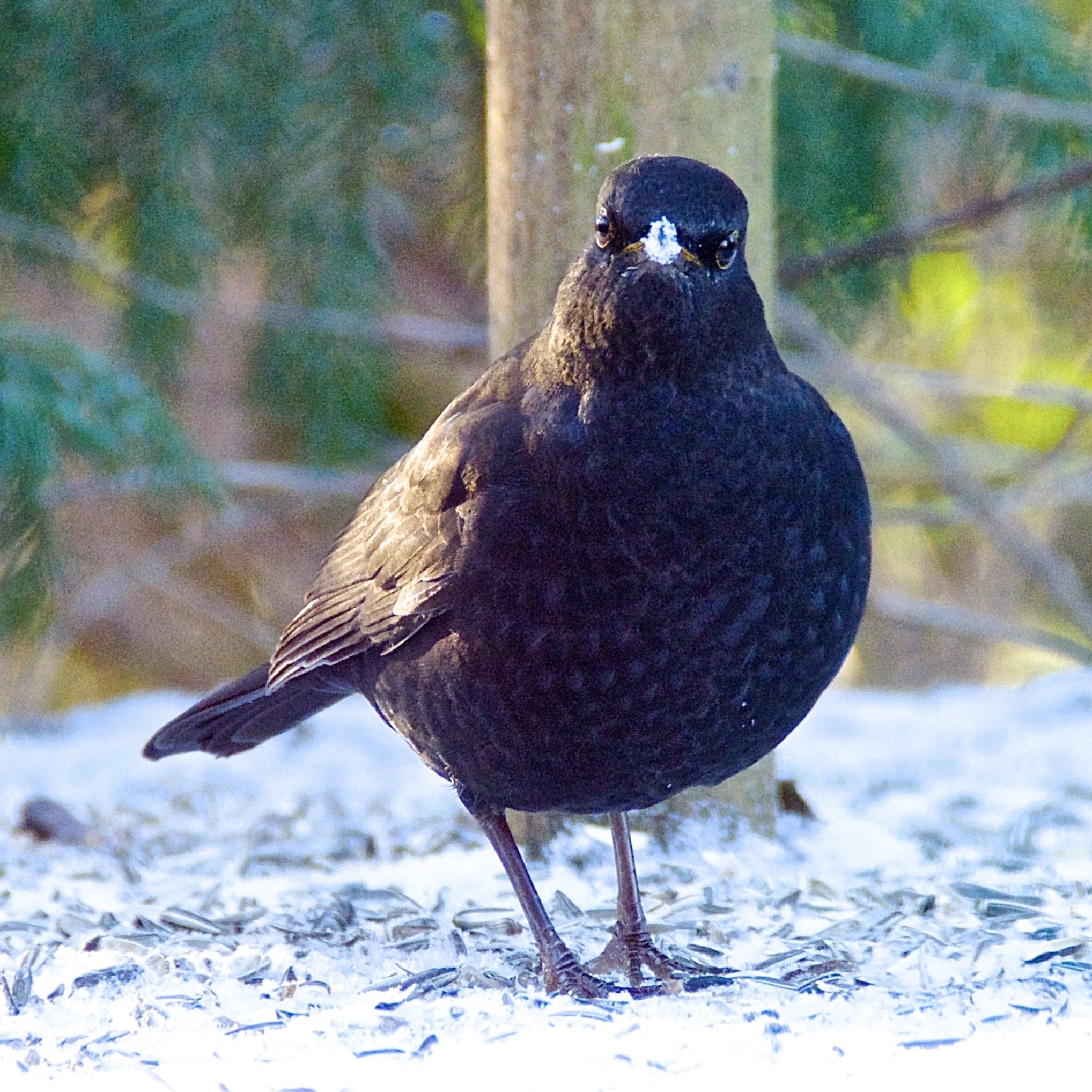 What???.....Snow!!!!!..... by Ib Krogh Johansen