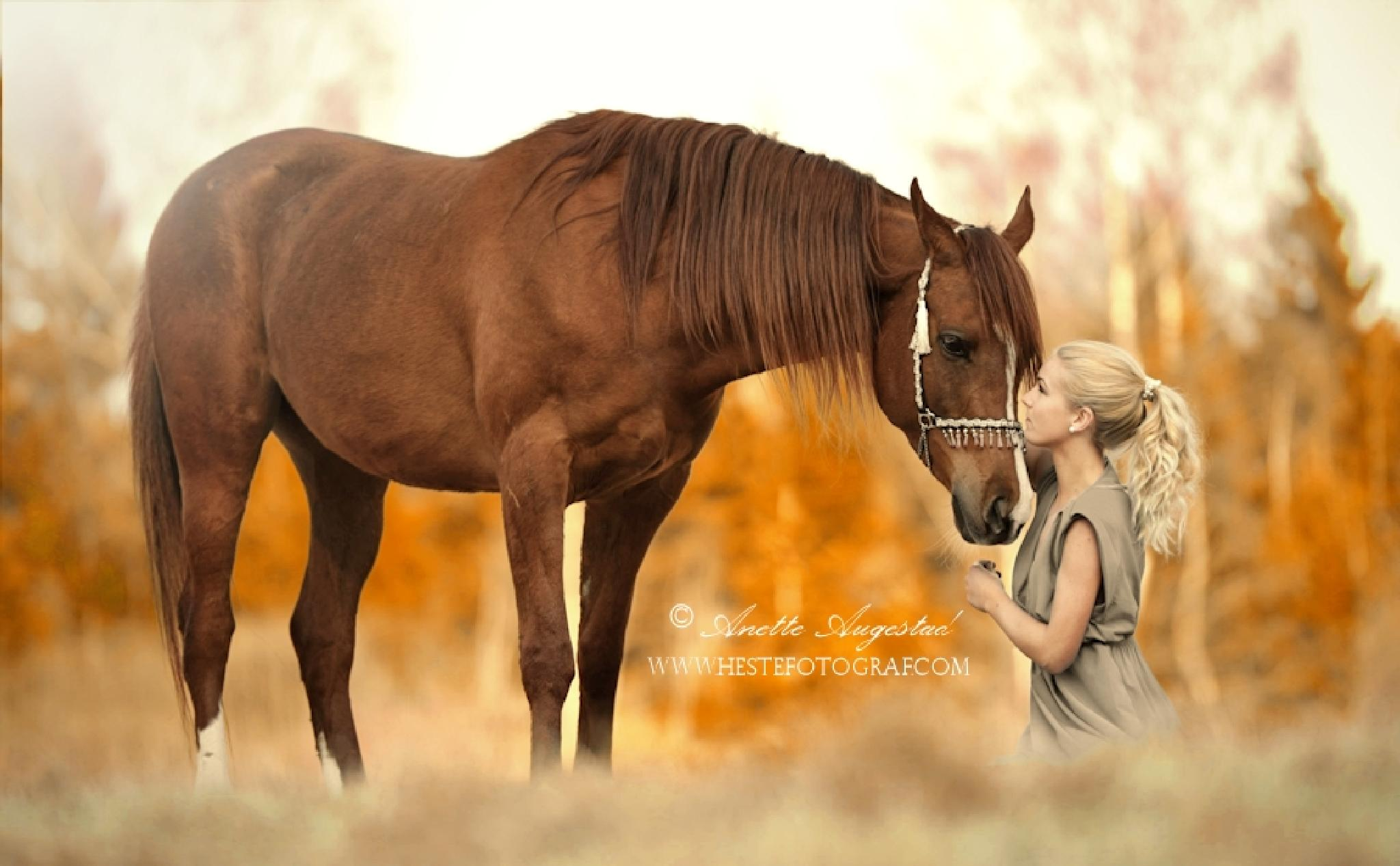 Promise In Autumn by Hestefotograf