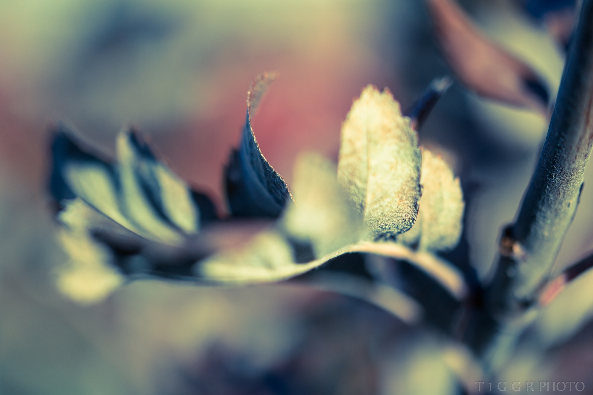 autumn abstract by t1ggr