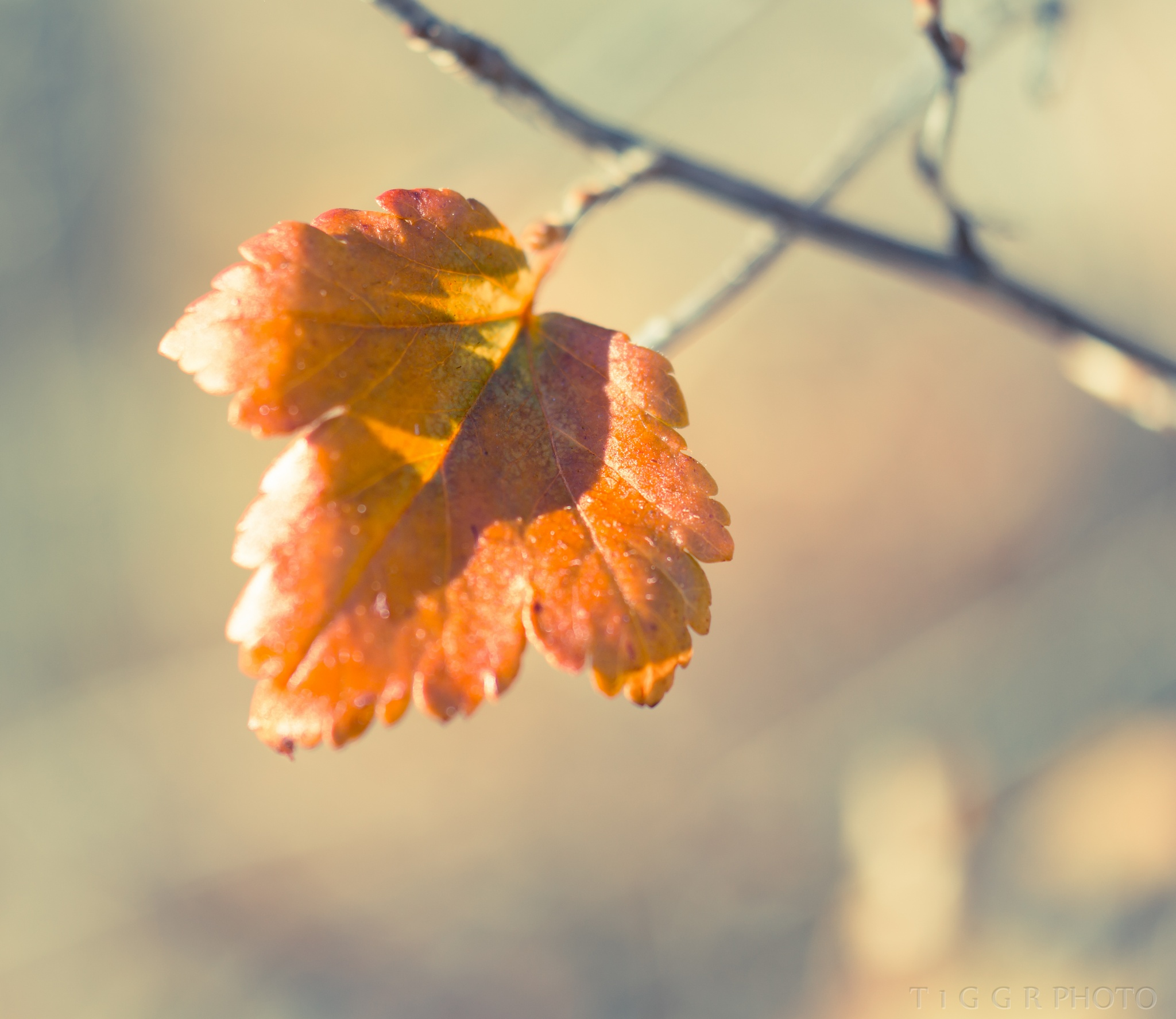 autumnal by t1ggr