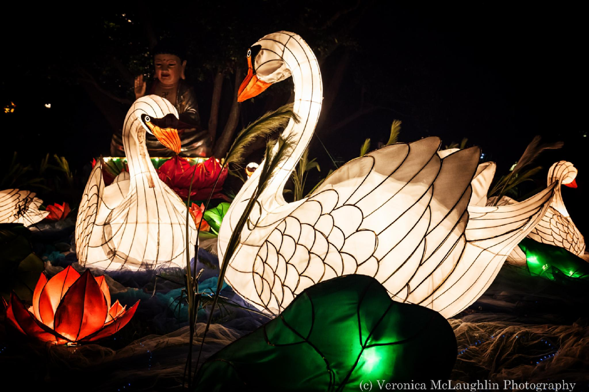 Swans in Light by Veronica McLaughlin