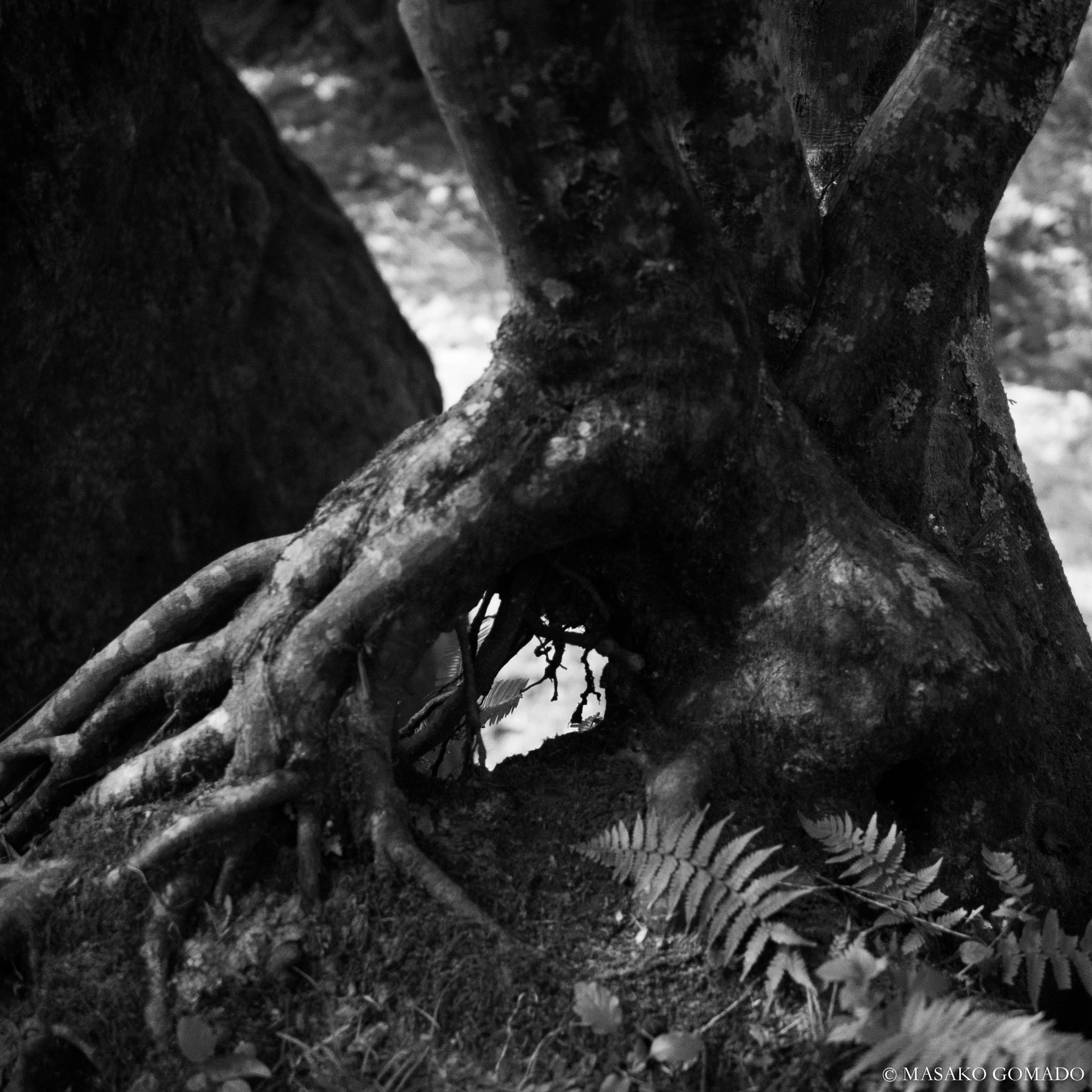 Root by Masako Gomado