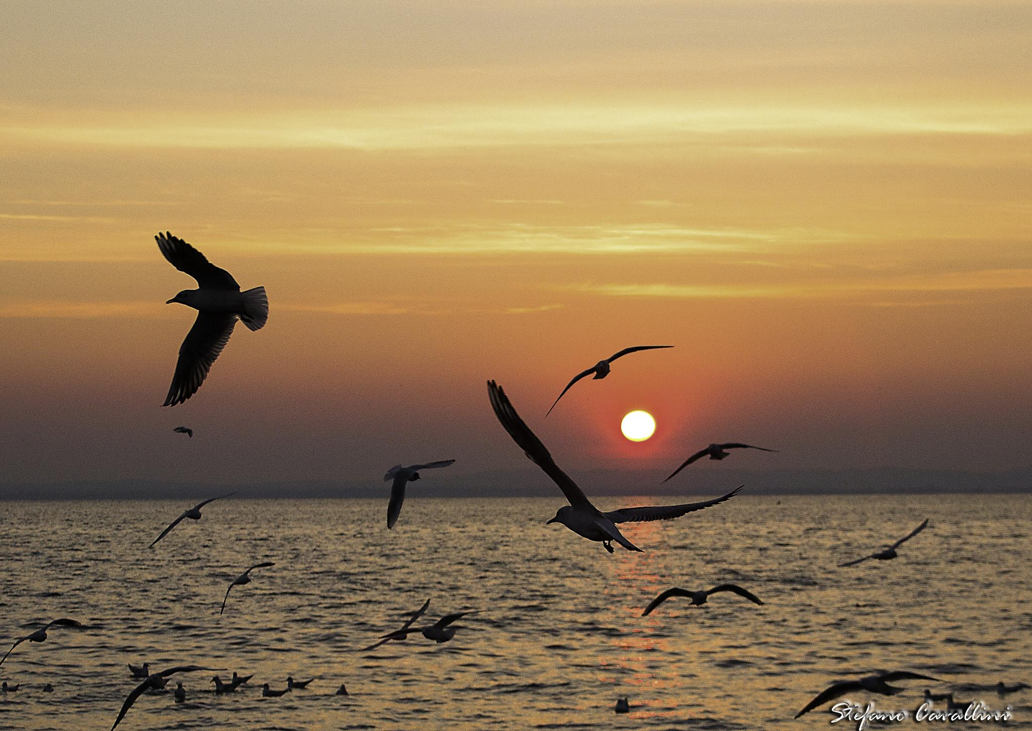seagulls at sunset on the lake by Stefano Cavallini