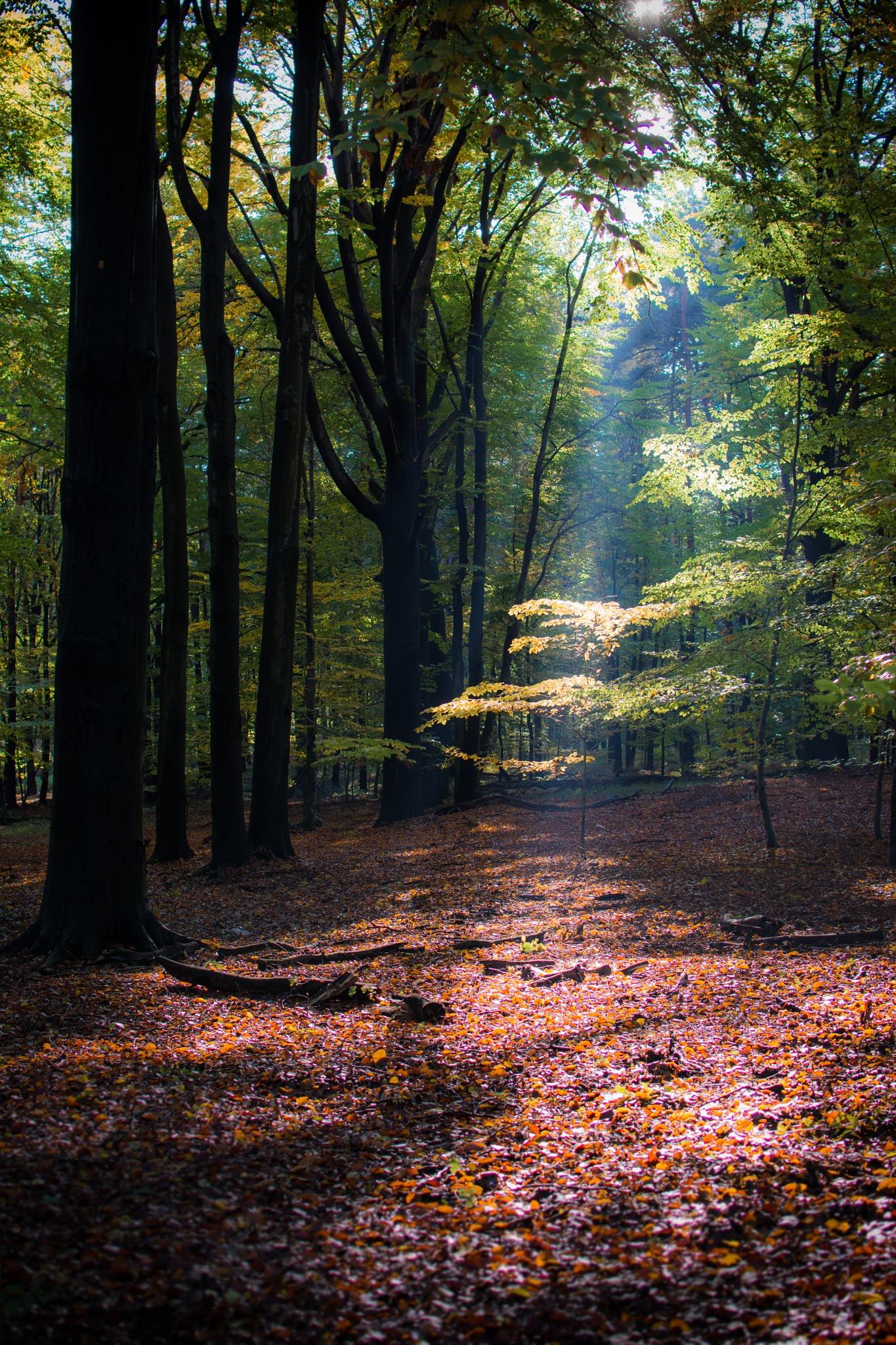 October by stoplamek