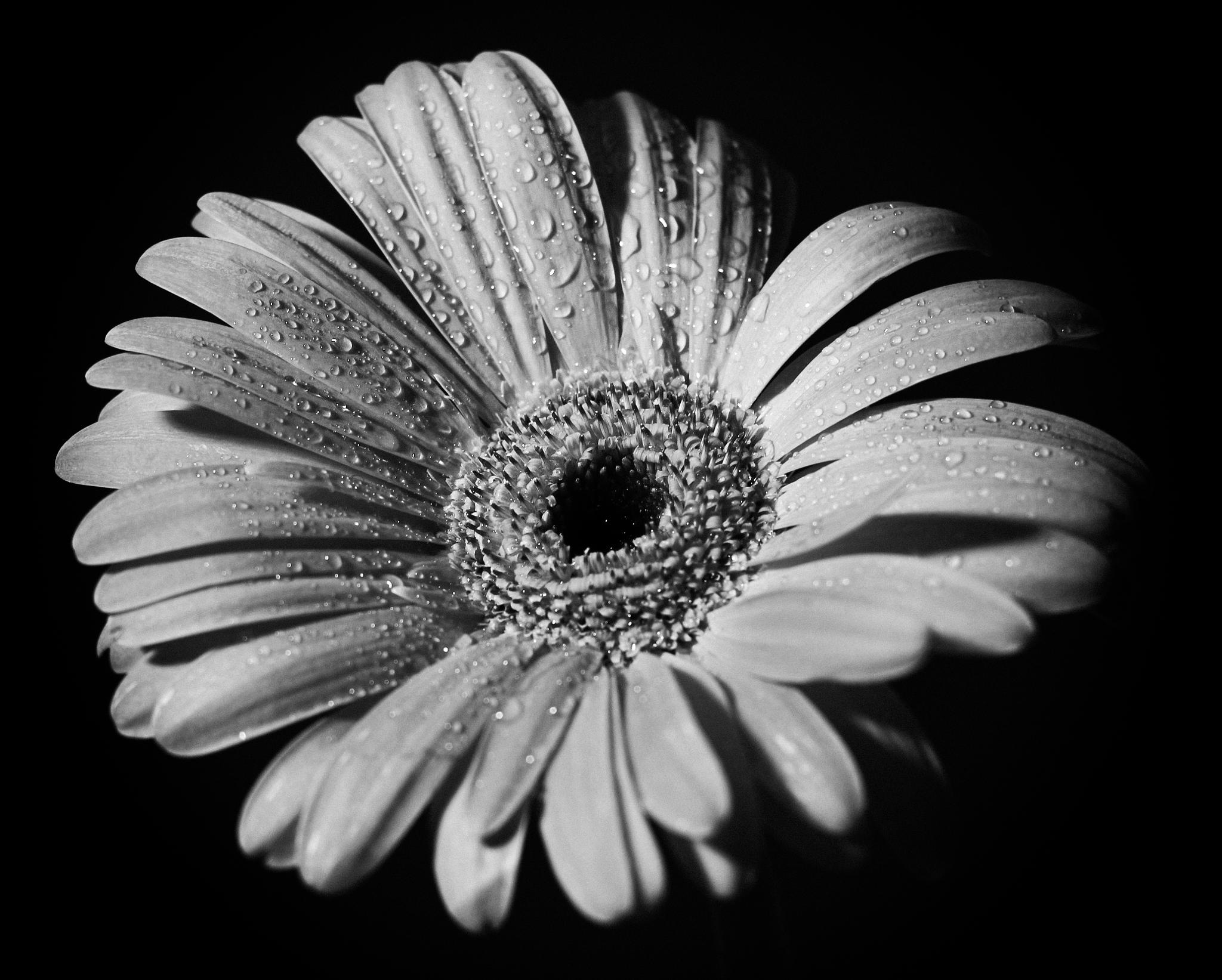Simply a flower by David Cantos
