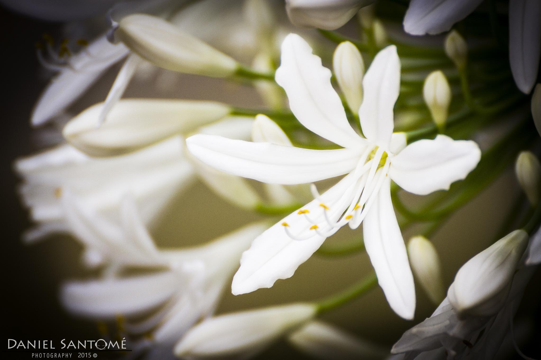 White Nature by Daniel Santomé Gallego