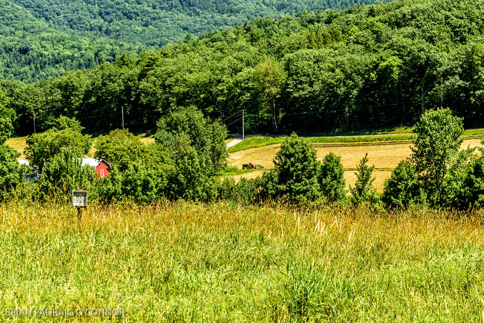 Haying Time in Vermont by Brian Padraig O'Connor