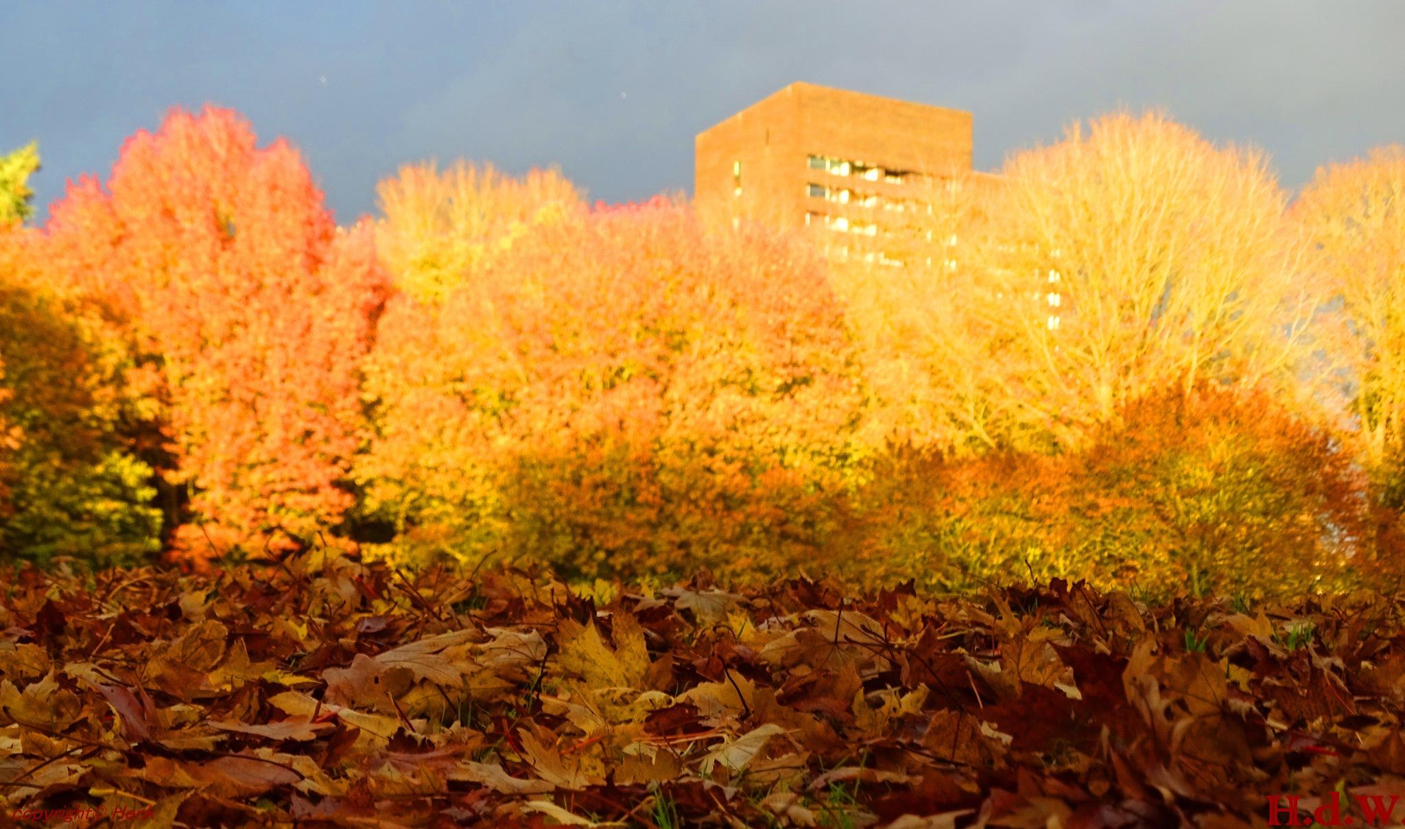 Herfst kleuren Leijpark Tilburg  by h_de_winter