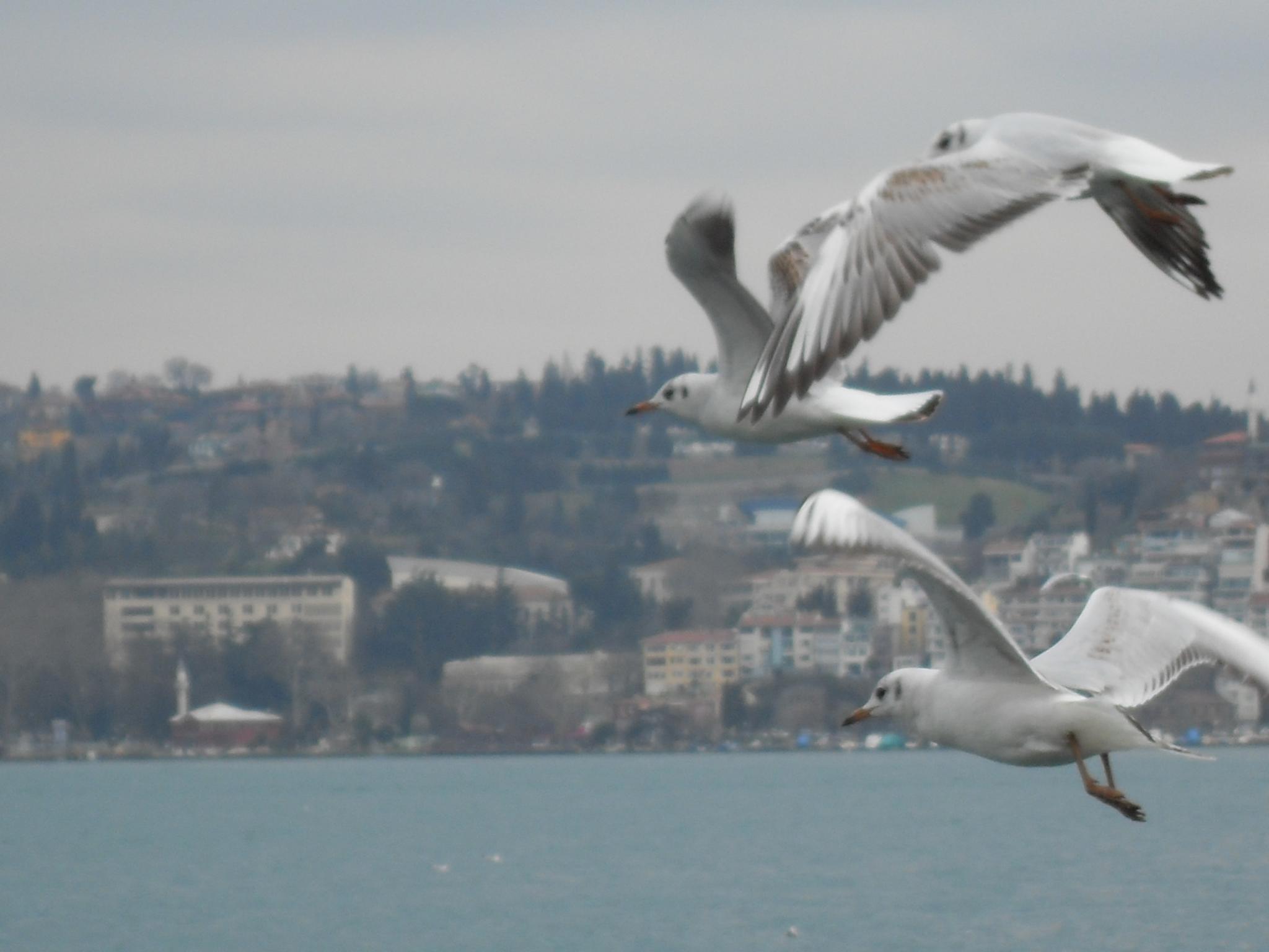 free by Ugur Sanliturk