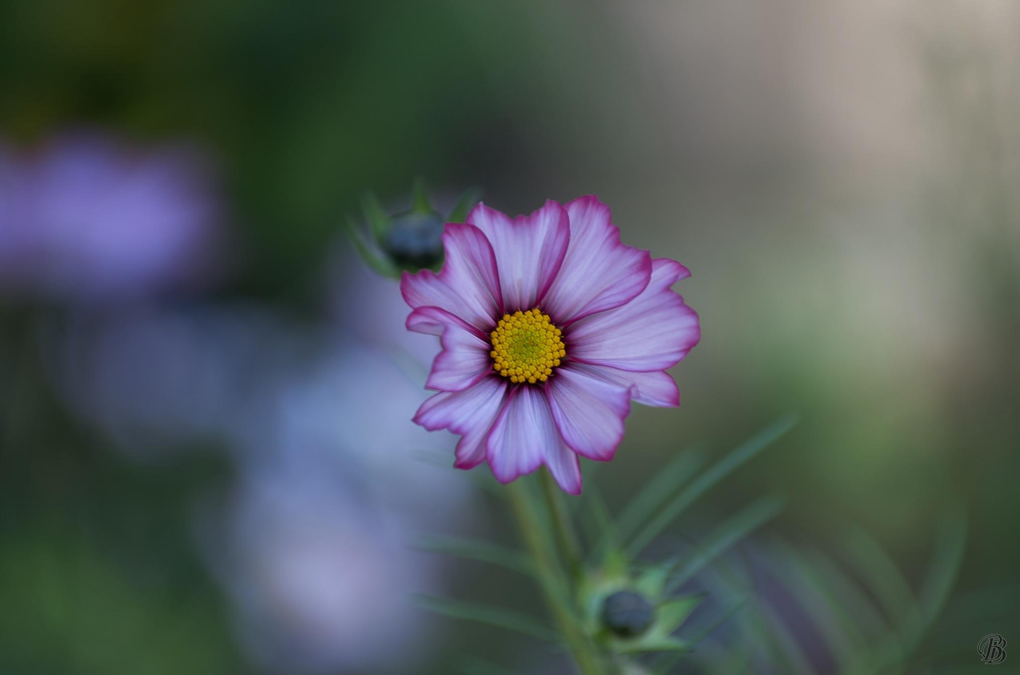 flora köln 2 by BorisLinder