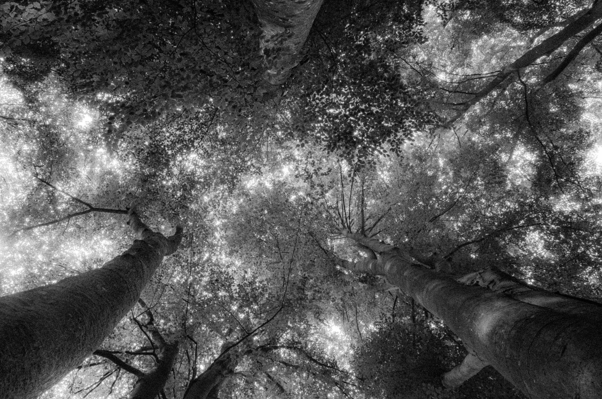 Vers les hauteurs. by krystelwillems