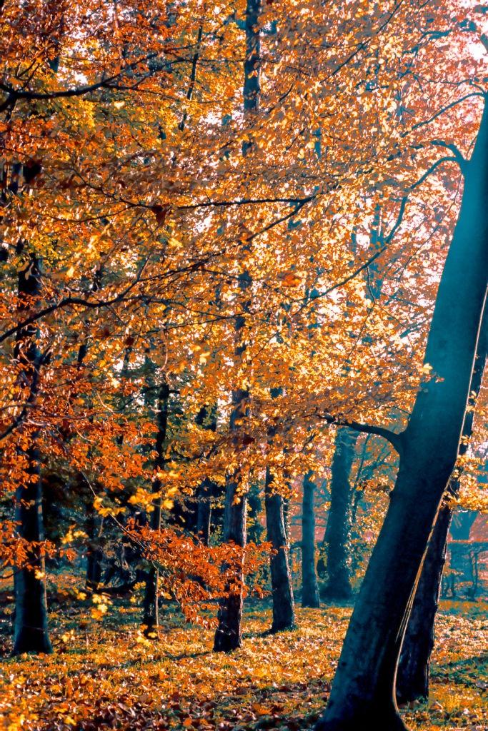 Season  by Nik Phot