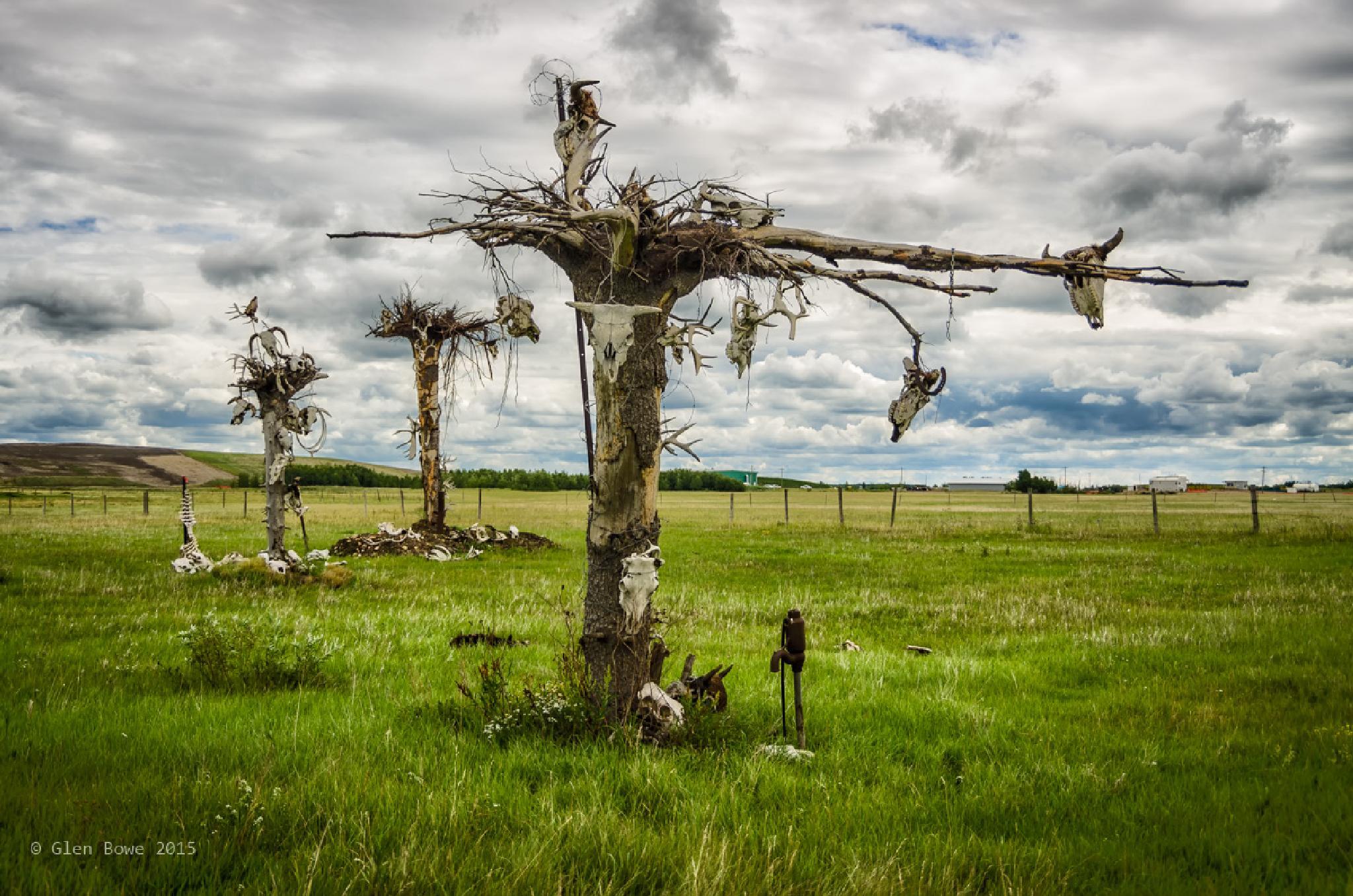 The Weird Tree of Bones by Glen Bowe