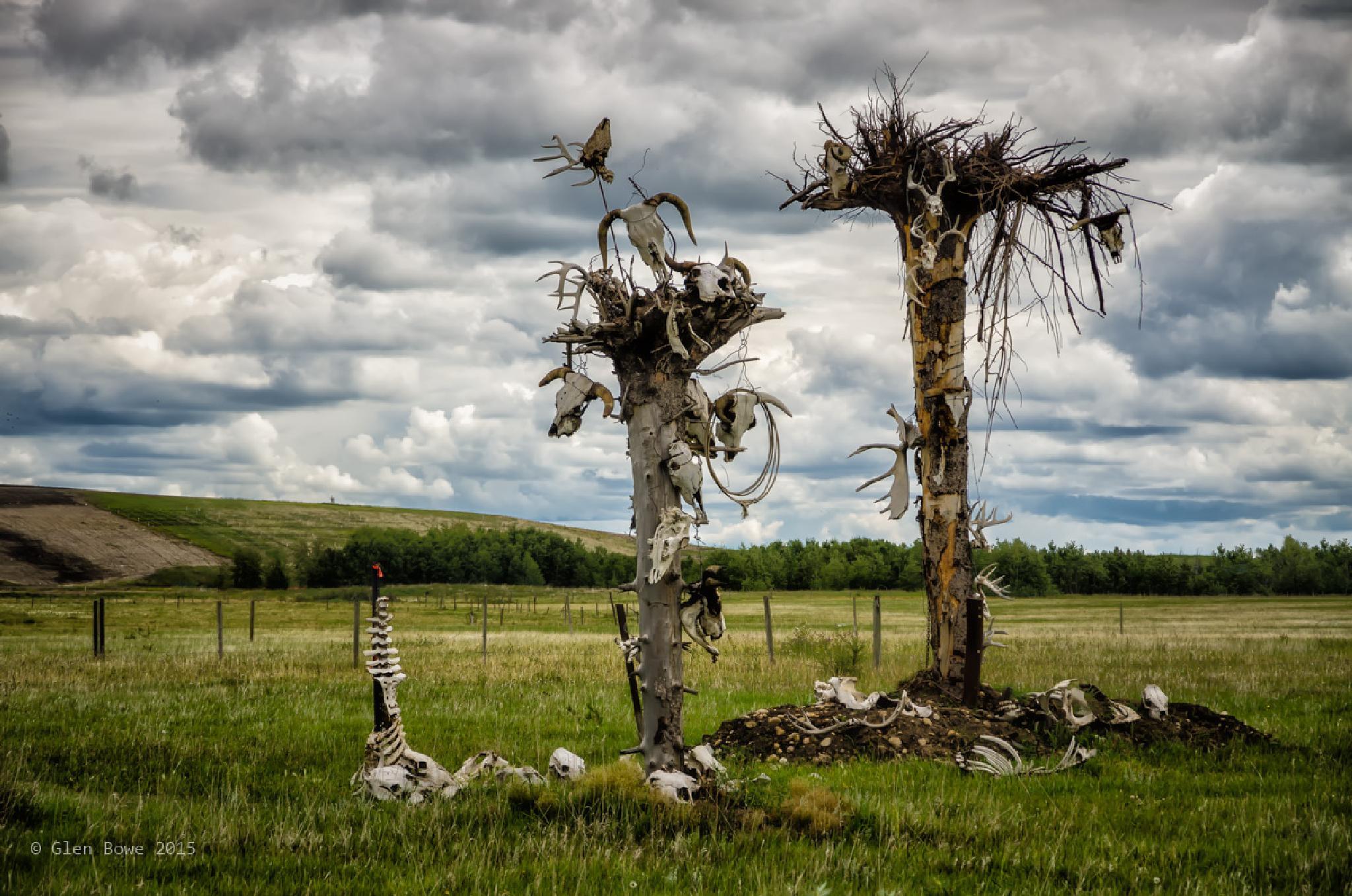 The Mystery Bone Trees by Glen Bowe