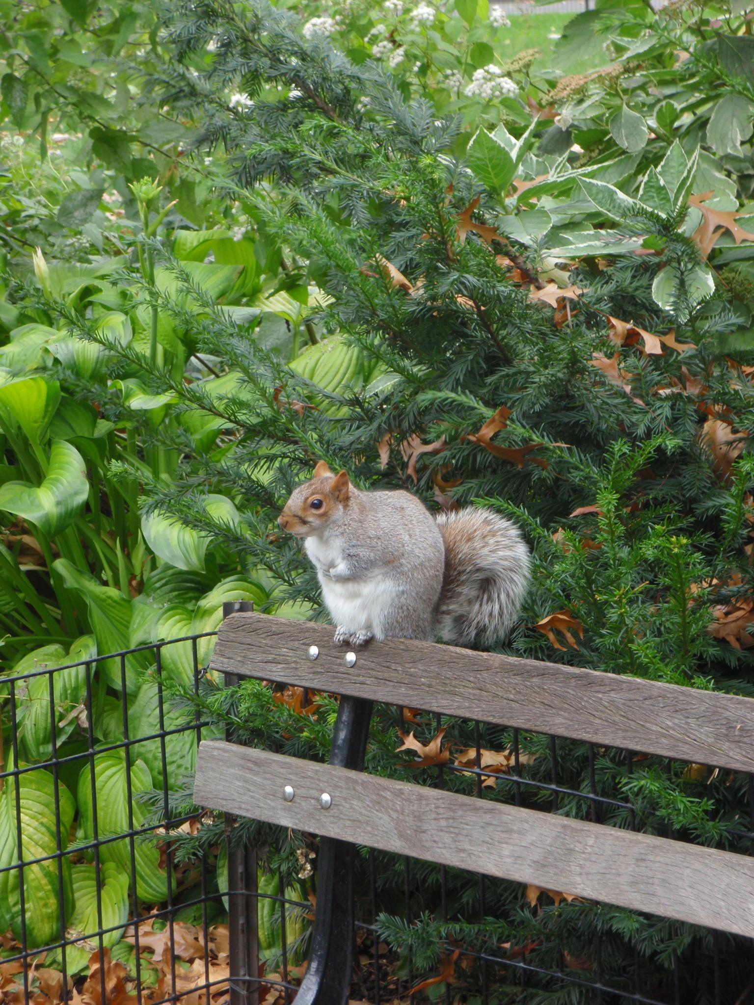 Squirrel by Isabel Gonzalez Martil