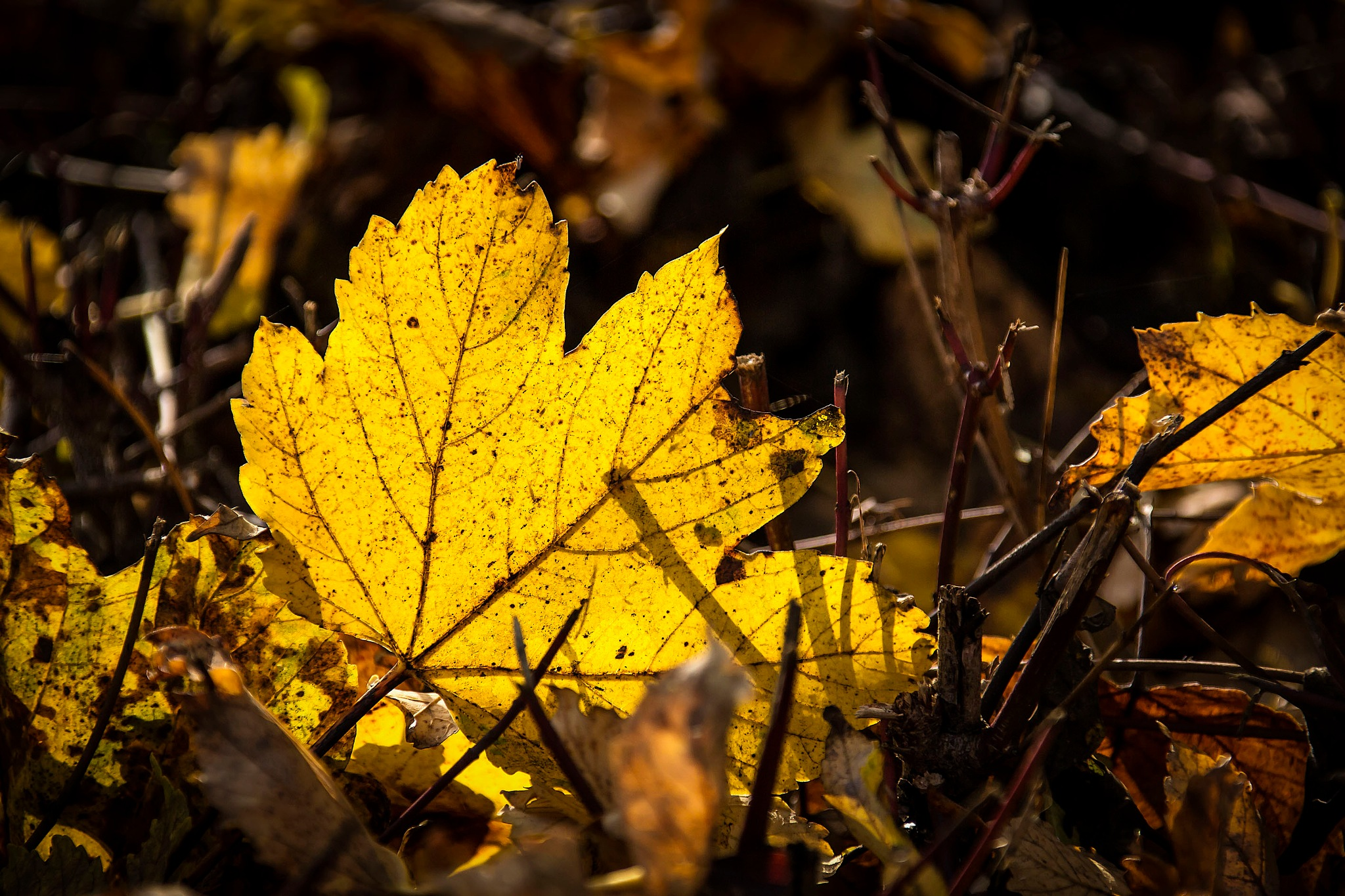 Autumn light by AdolfBeck