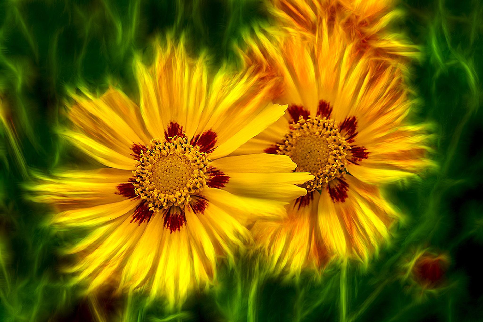Blooming beauties by AdolfBeck