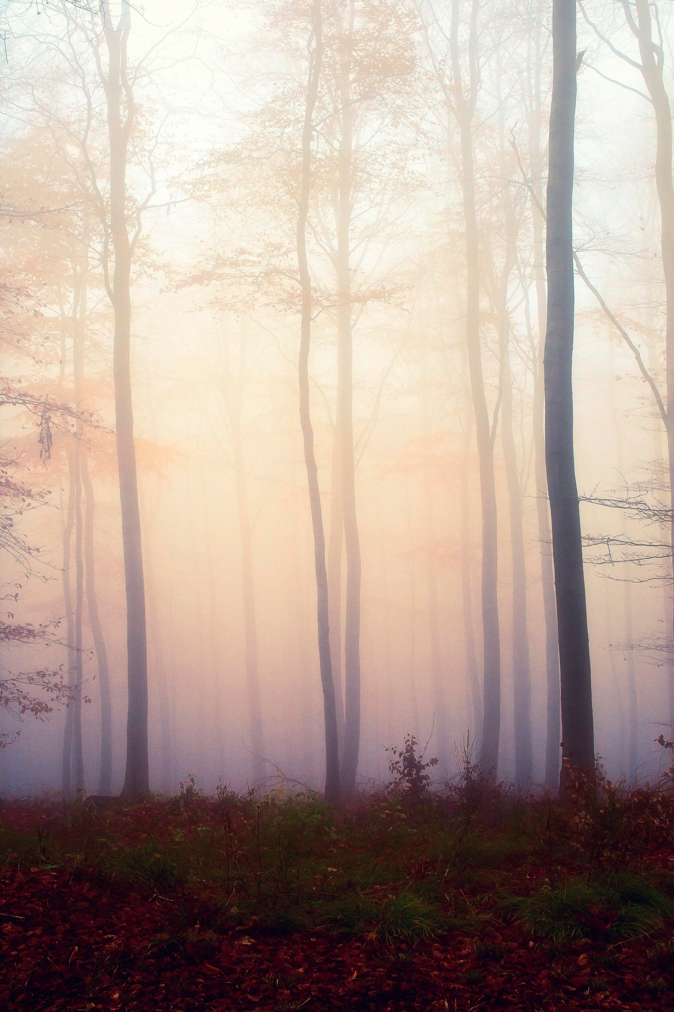 Misty forest by AdolfBeck