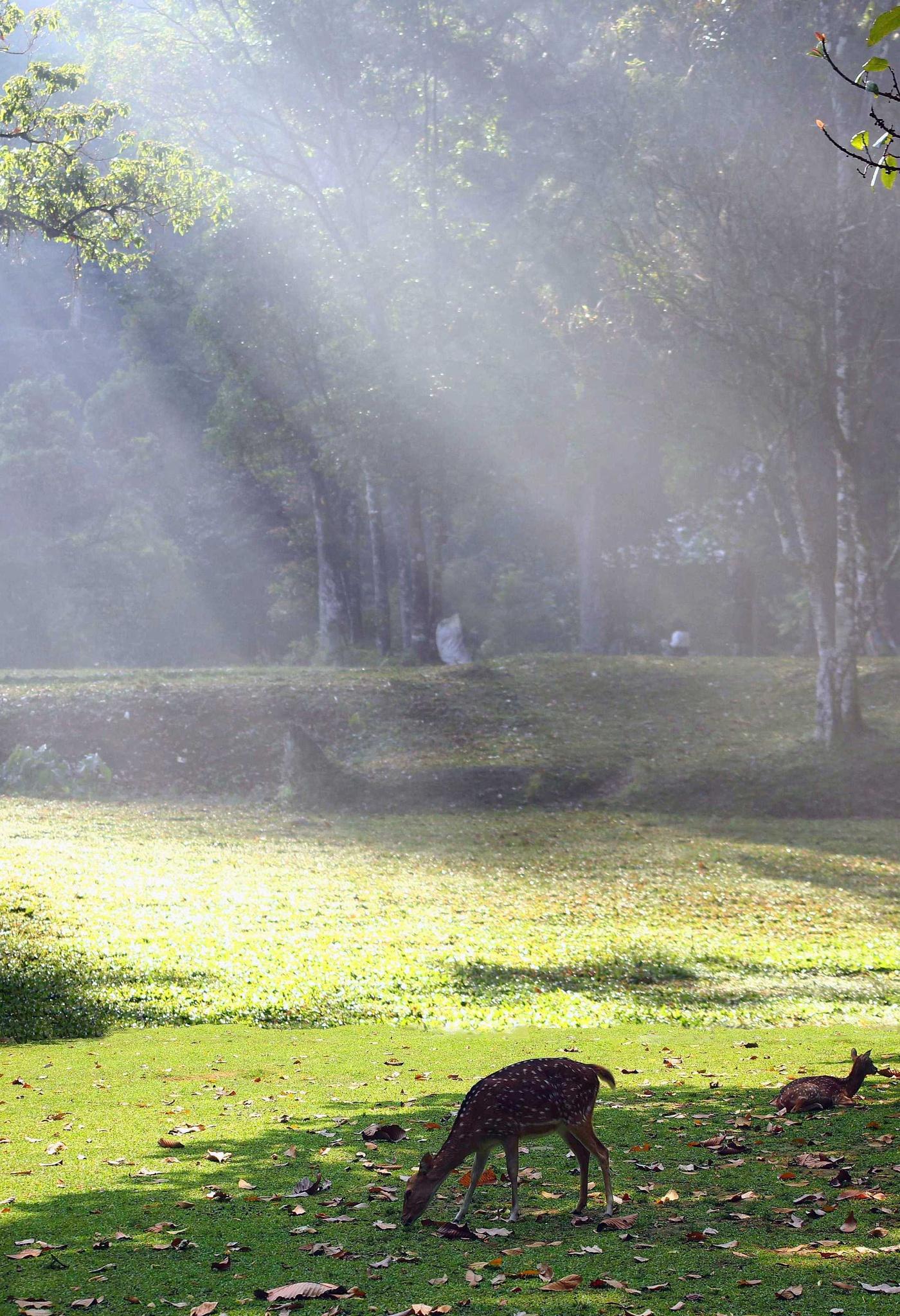 Pagi Hari by Dedi Ogie S
