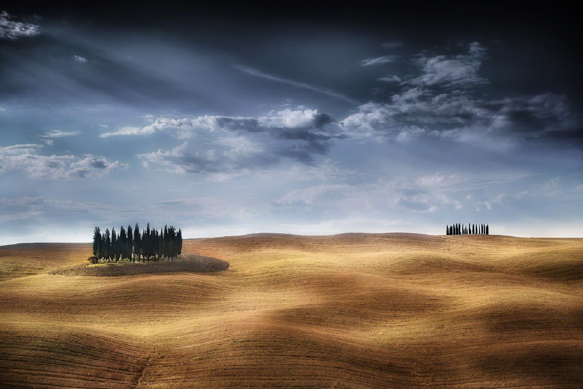 Fields of Gold by Manfred Voss