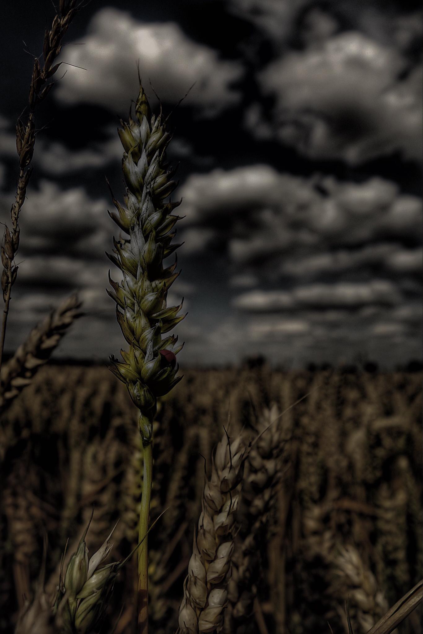 Storm on the way by Paul Agnoli