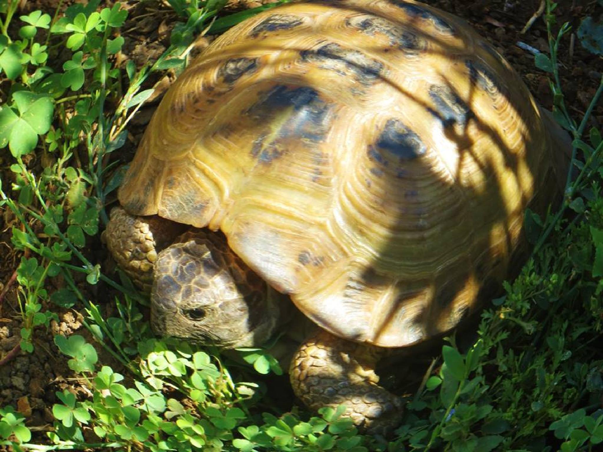 Mr. Turtle by Denise Fink