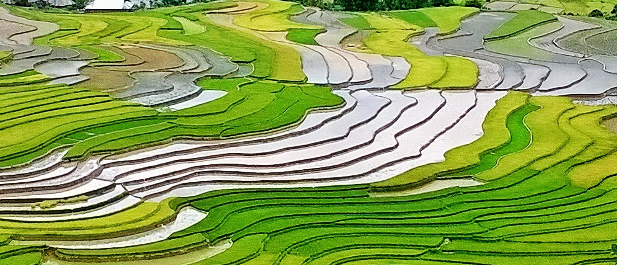 Color of rice season. by kienngotrung18