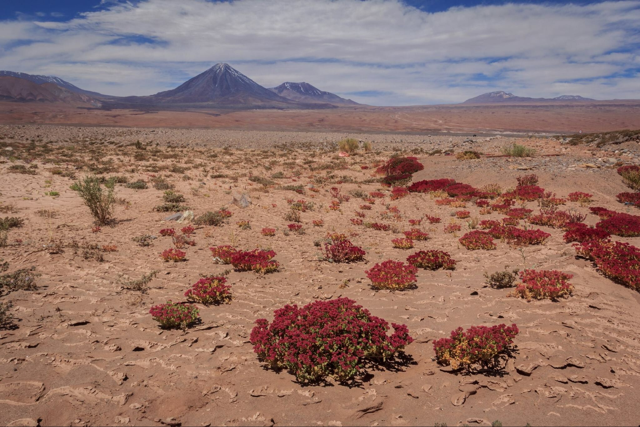 Atacama desert by Liliana