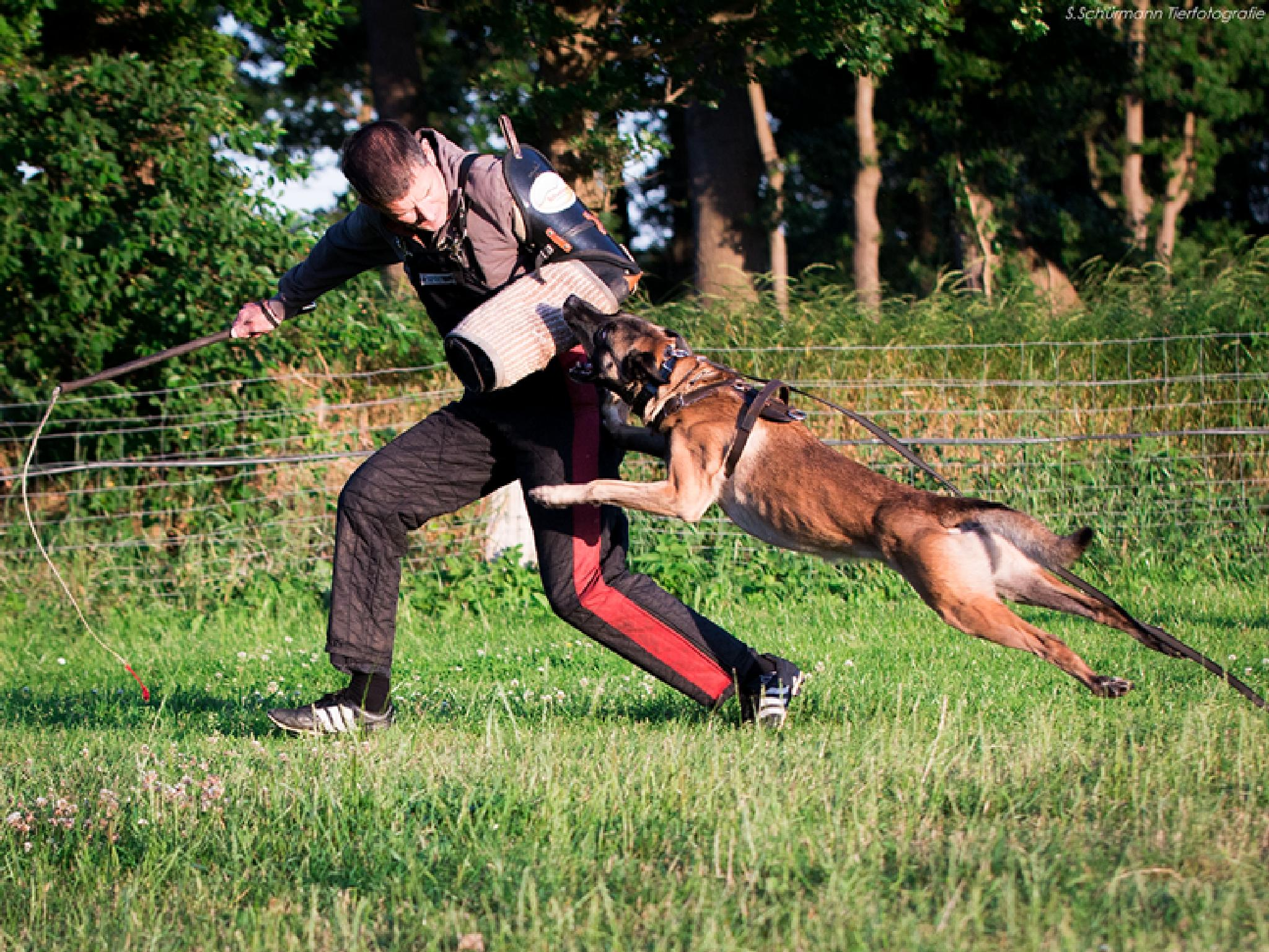 Policedog by Schürmann