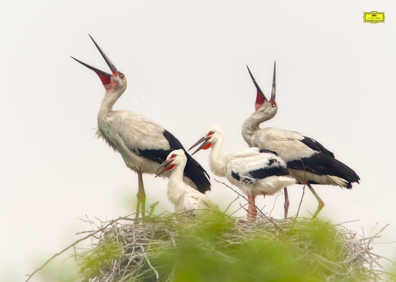 Photo in Animal #white #stork #baby #family