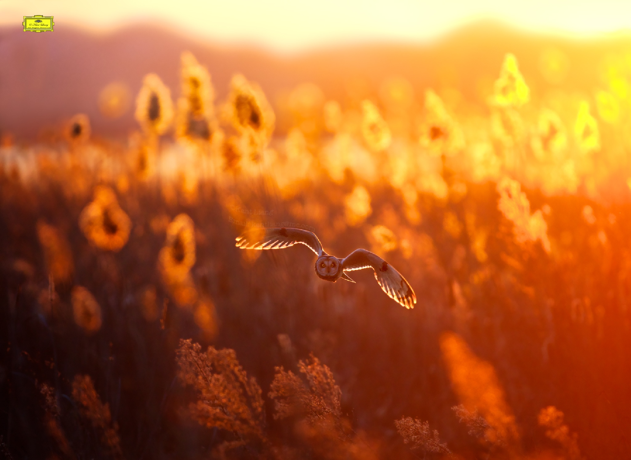 Flying Owl by Kant