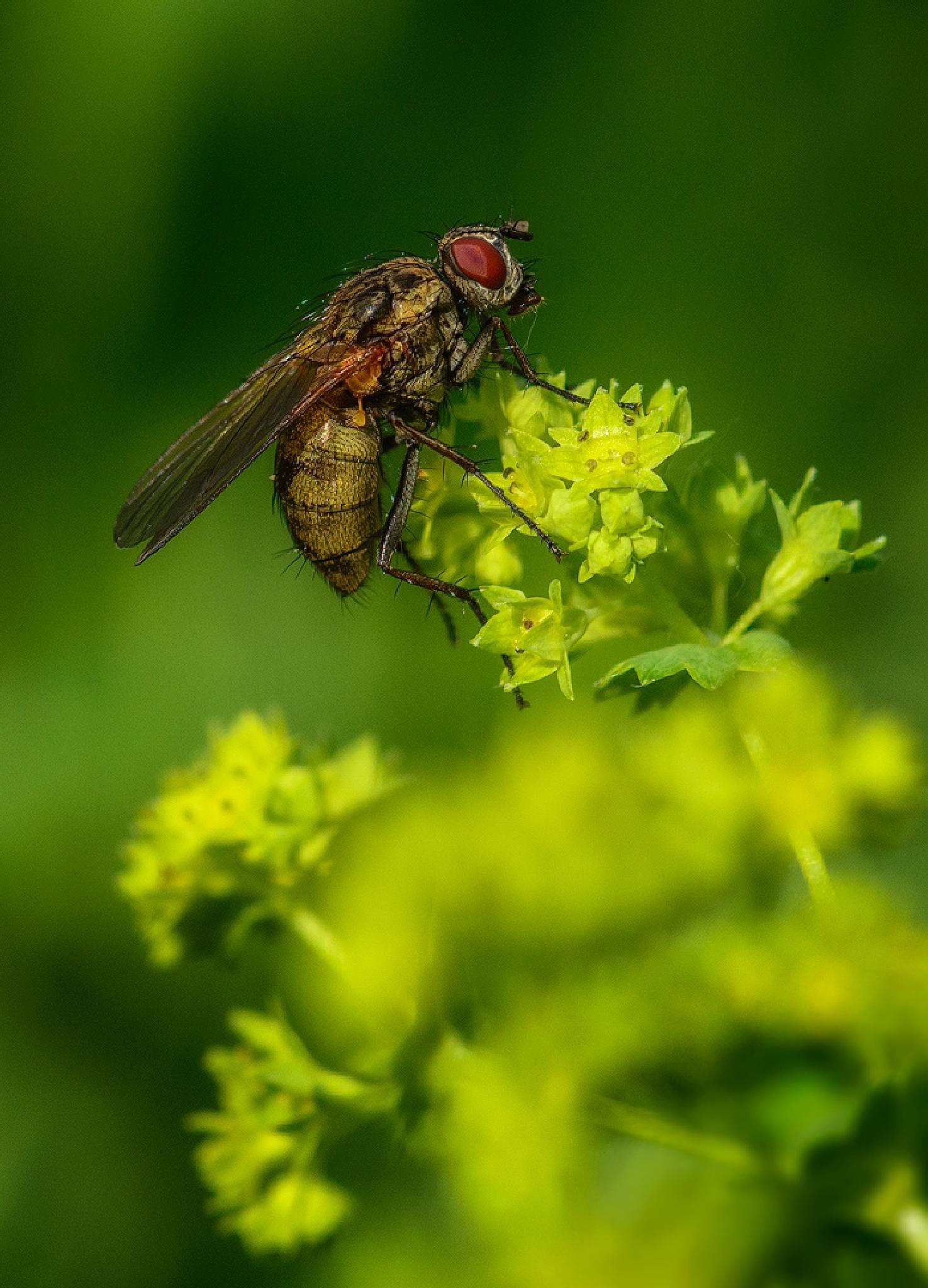 Fly by Kirill Volkov