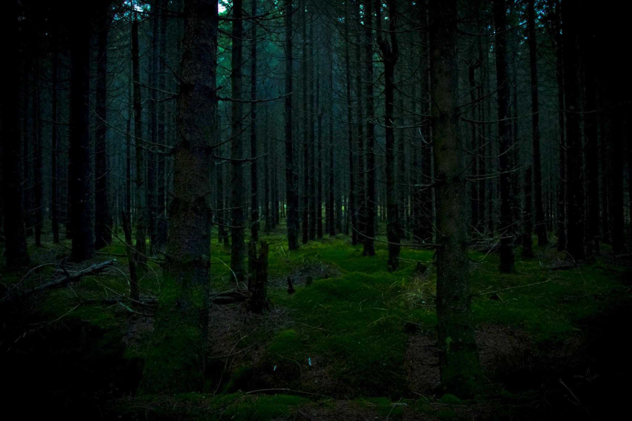 Forest by maikelaarmot