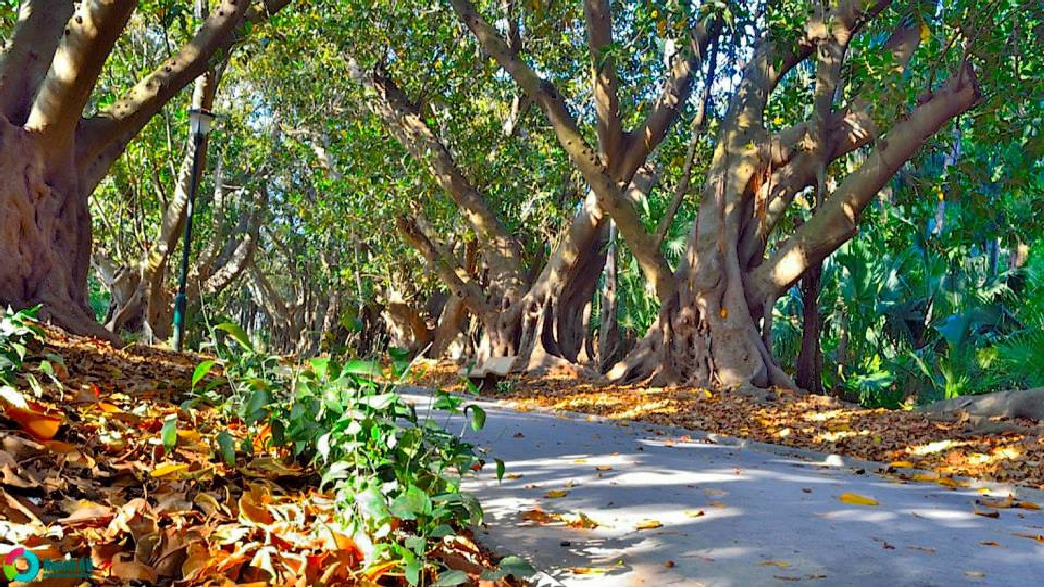 Botanical Garden Hamma, Algeria by nouah ali