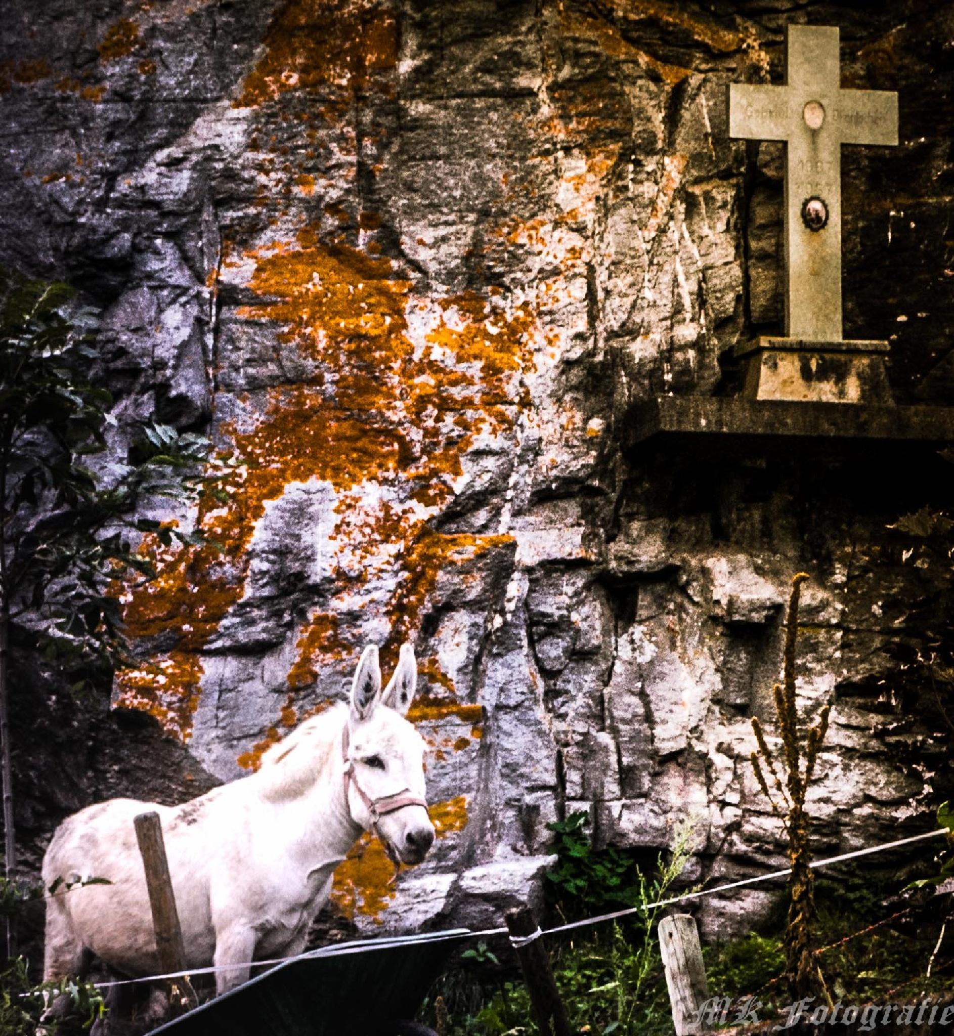 Pferd bei einem Kreuz by Kronig Fotografie