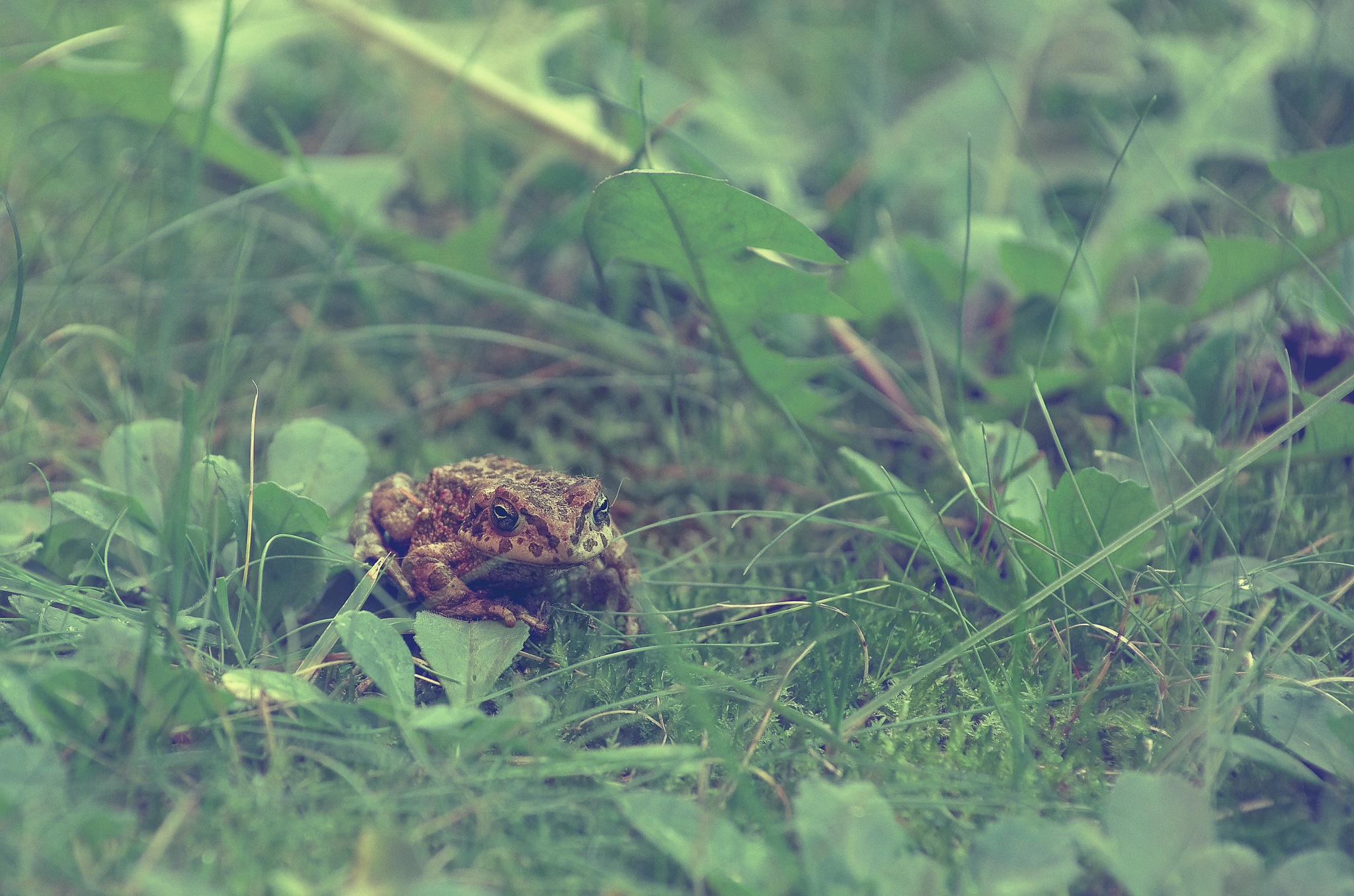 toad by andreabergamo1