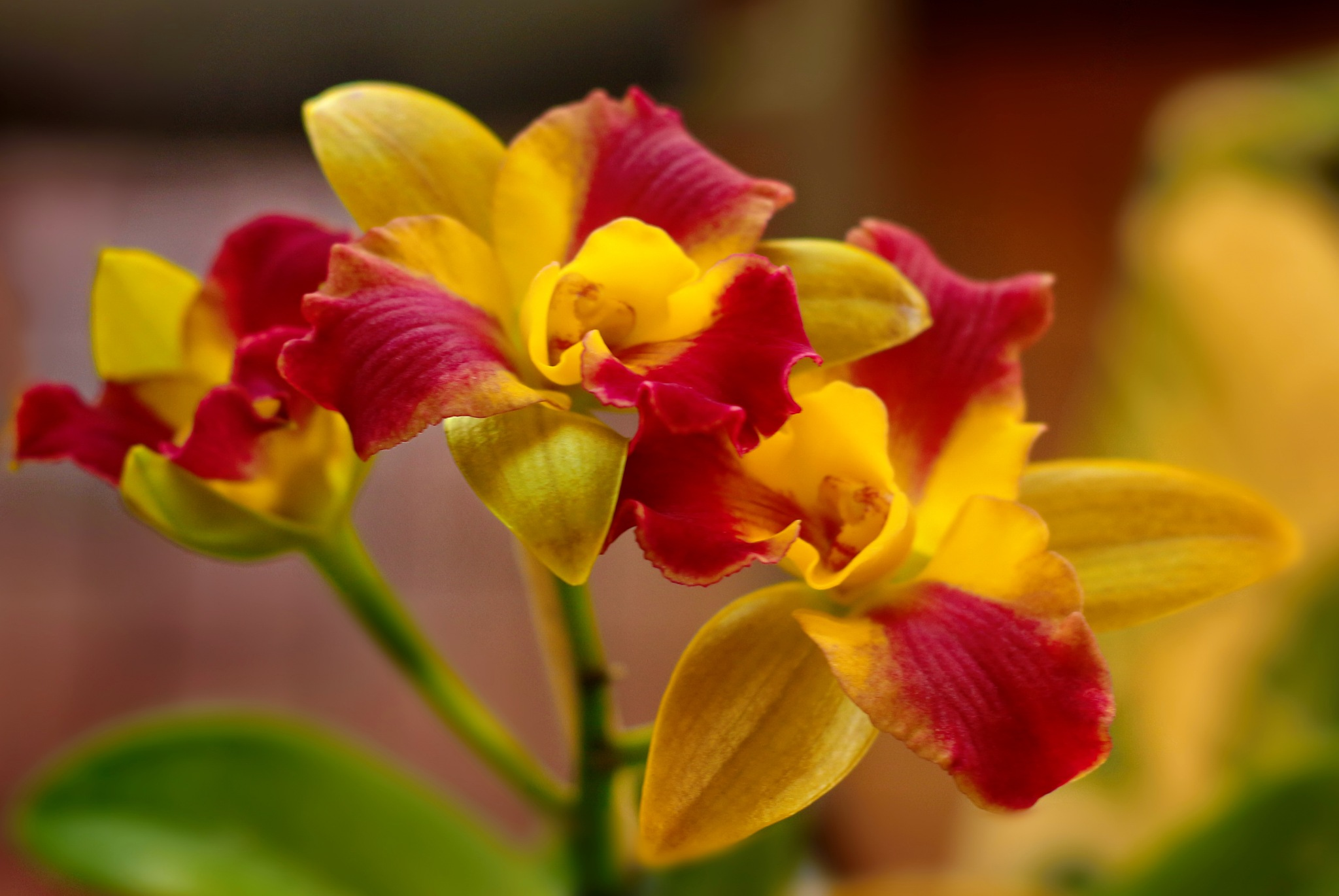 Colorful Orchid. by Nestor
