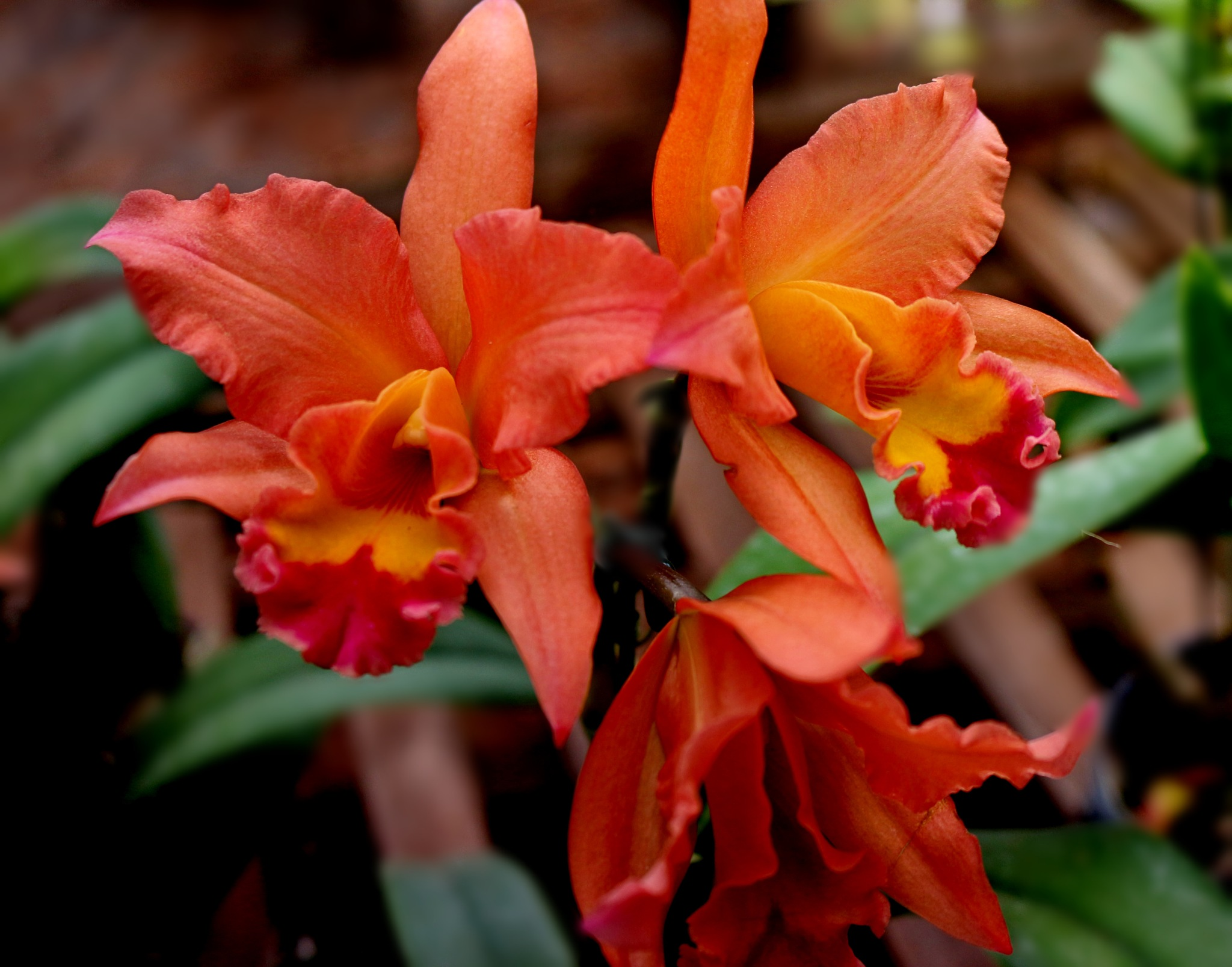 Multicolored orchids. by Nestor