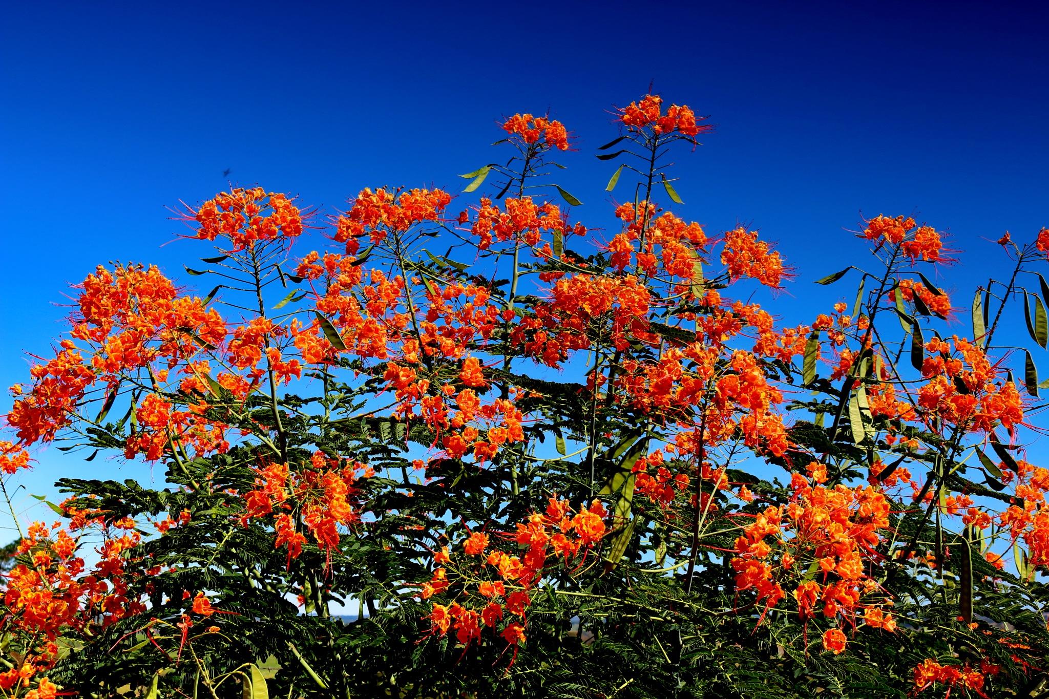 Many flowers... by Nestor